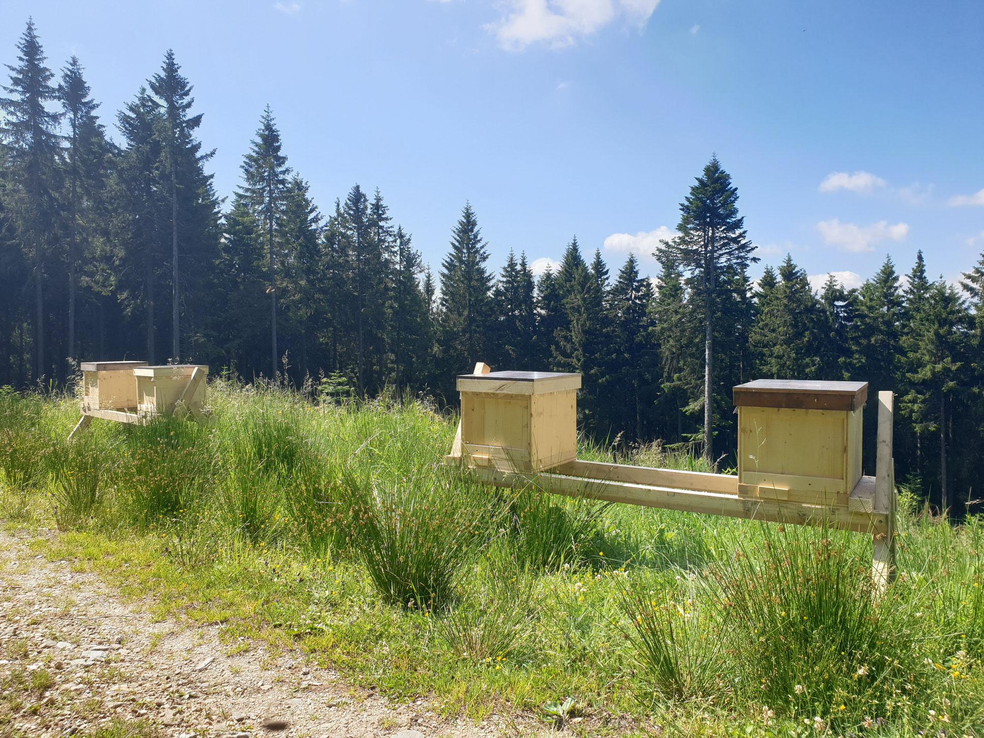 Bienenstand auf 1400 Meter Seehöhe