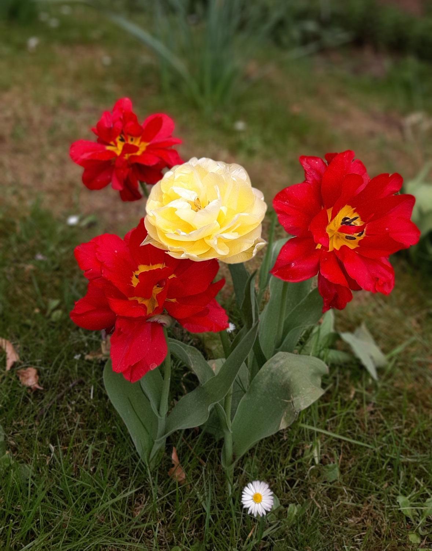Frühling: Aufbruch und Hoffnung