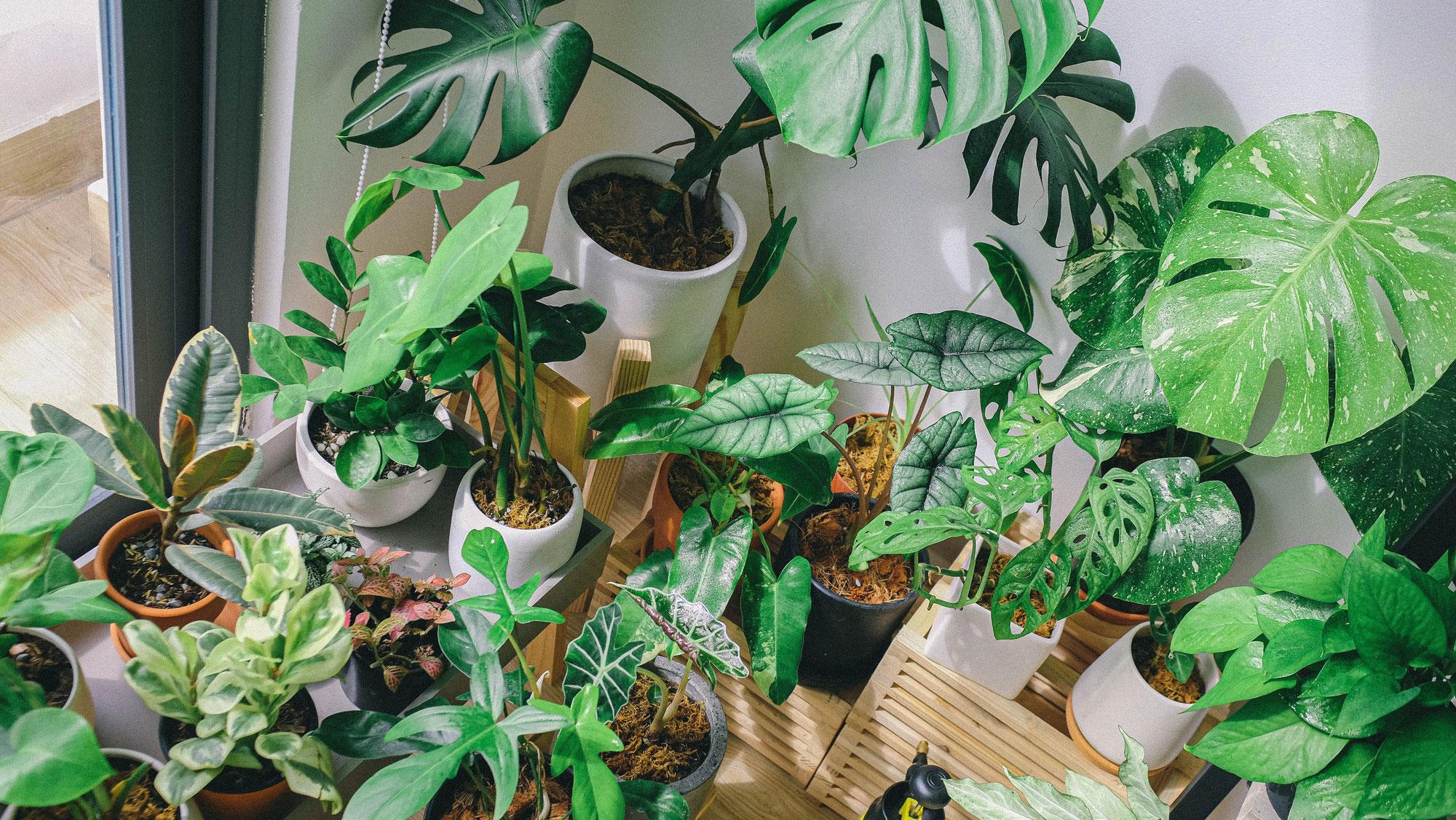 Zimmerpflanzen - unsere Trend's