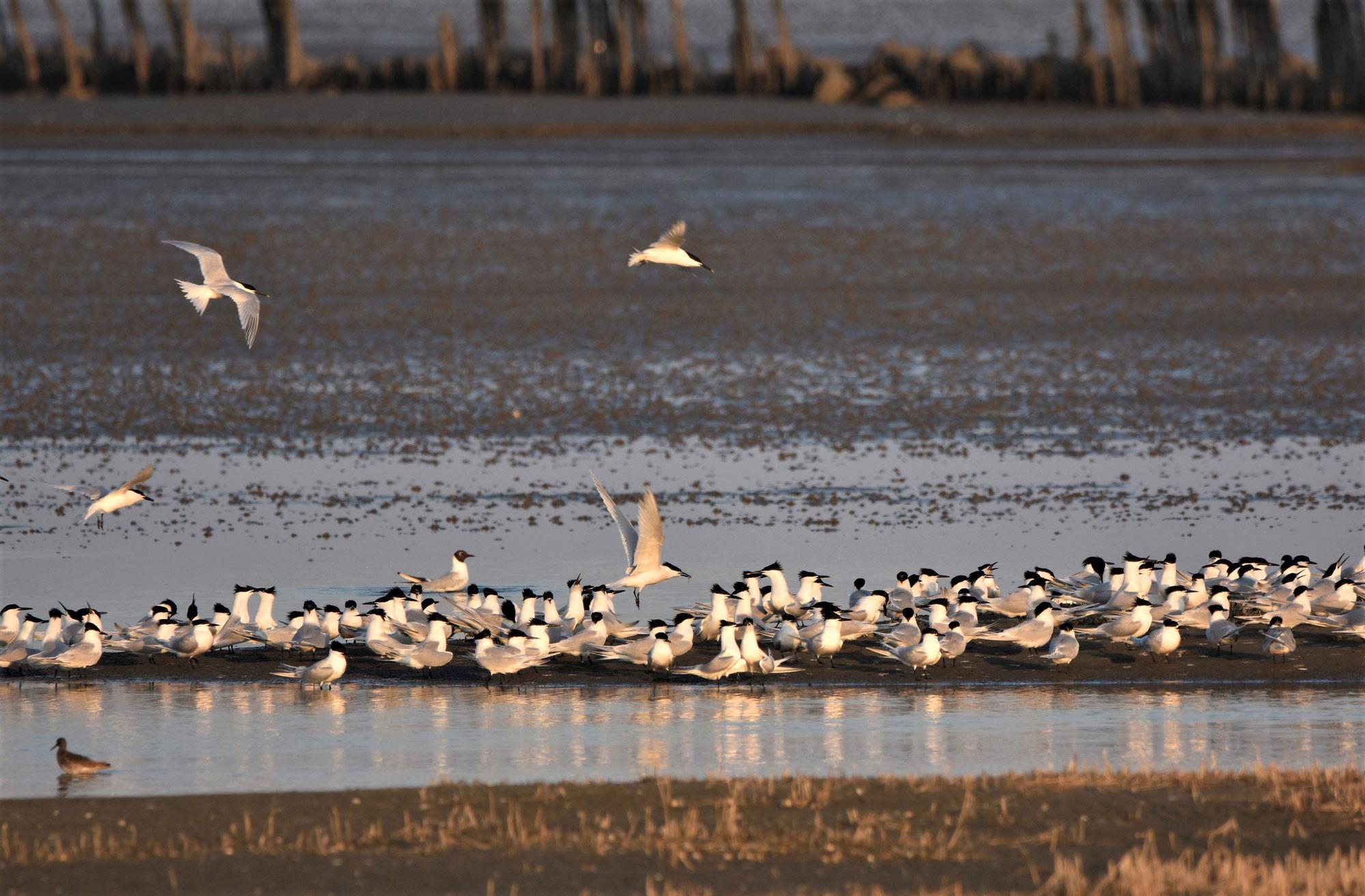 Vogelwelt Neuwerk (Online-Vortrag)