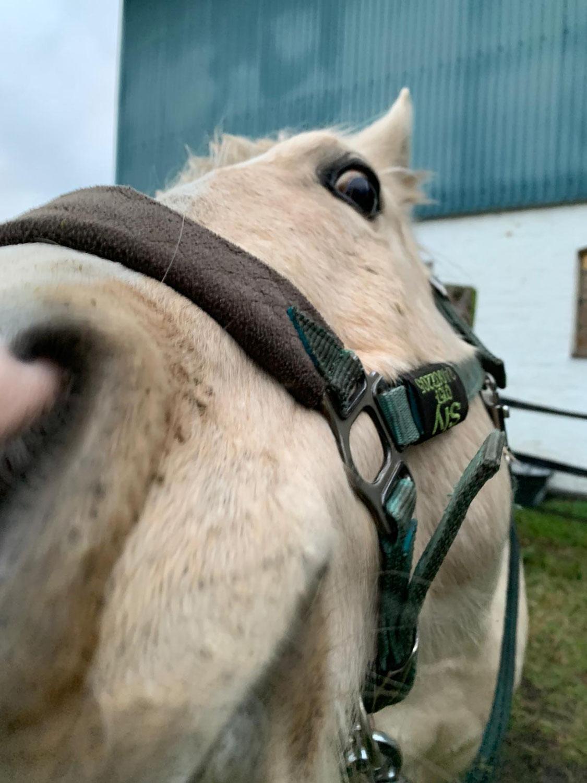 Trauma-Pferdchen Folge 3 - In den Körper kommen