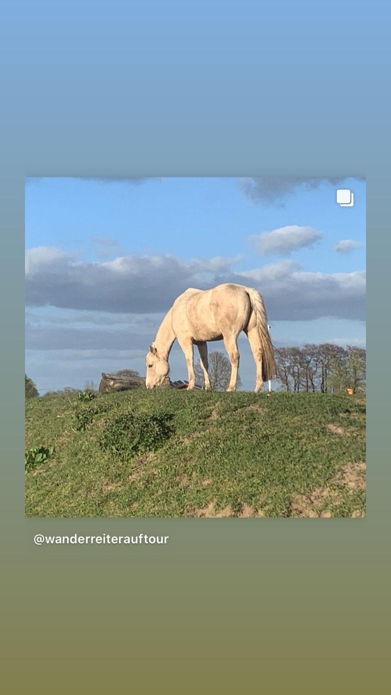 Trauma - Pferdchen Folge 4 - einander vertrauen
