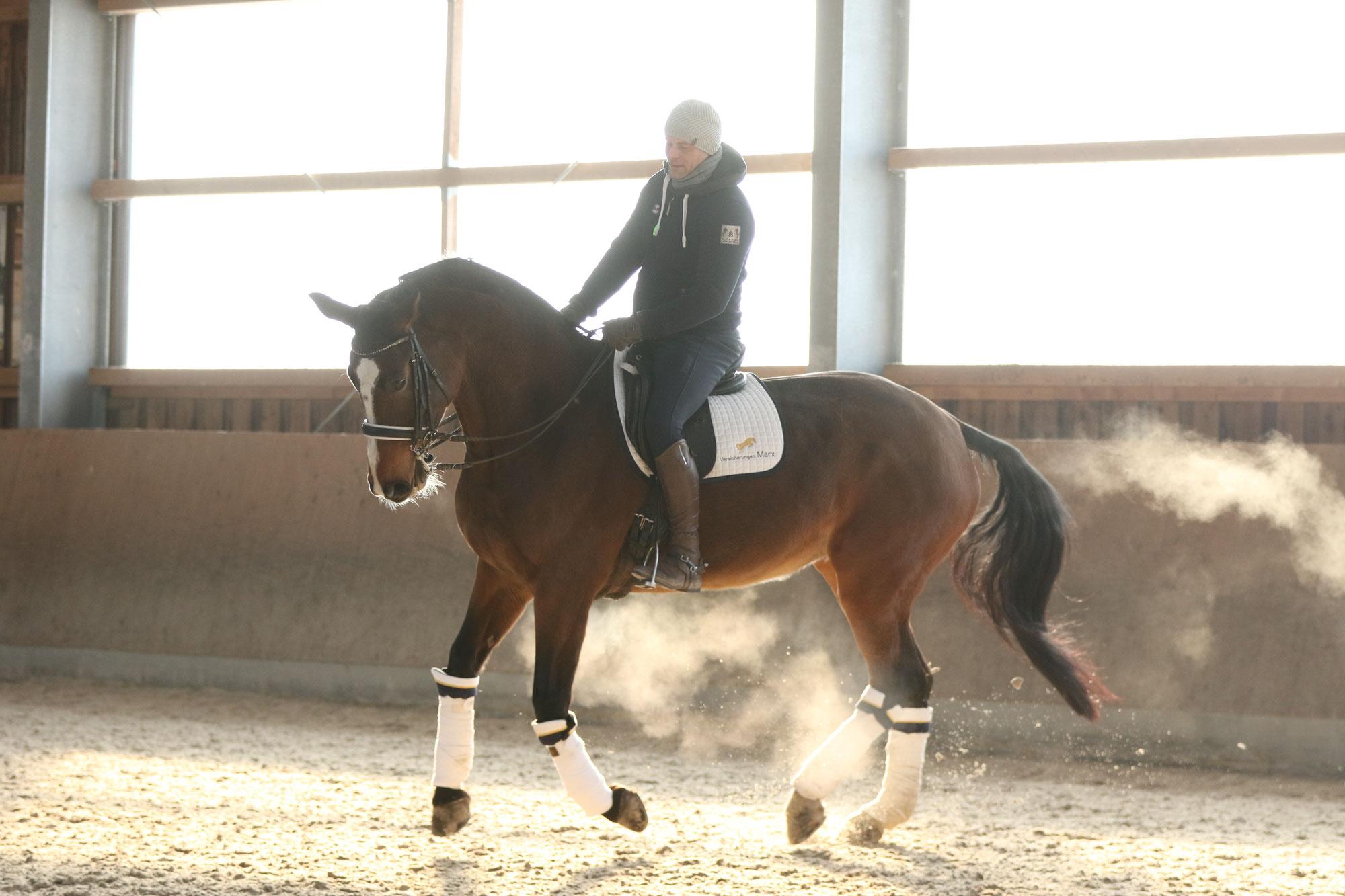 Berufsunfähigkeitsschutz speziell für Pferdewirte