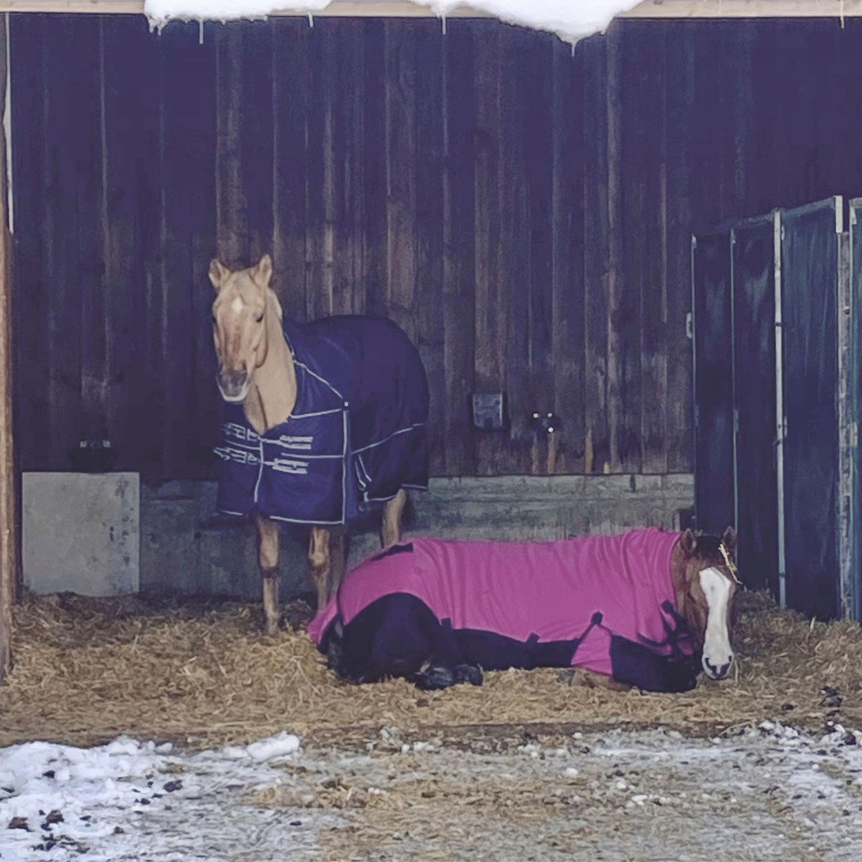 Zusammen ist man weniger allein - Pferdefreundschaften sind mehr als nur Zweckgemeinschaften