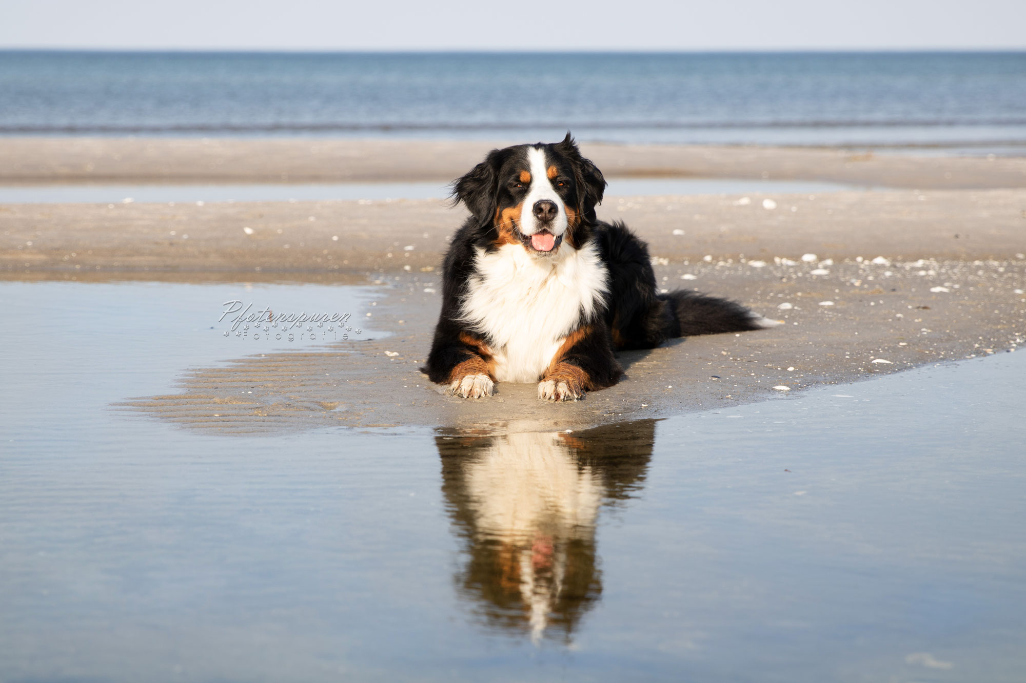 Vacation with your dog at the Baltic Sea