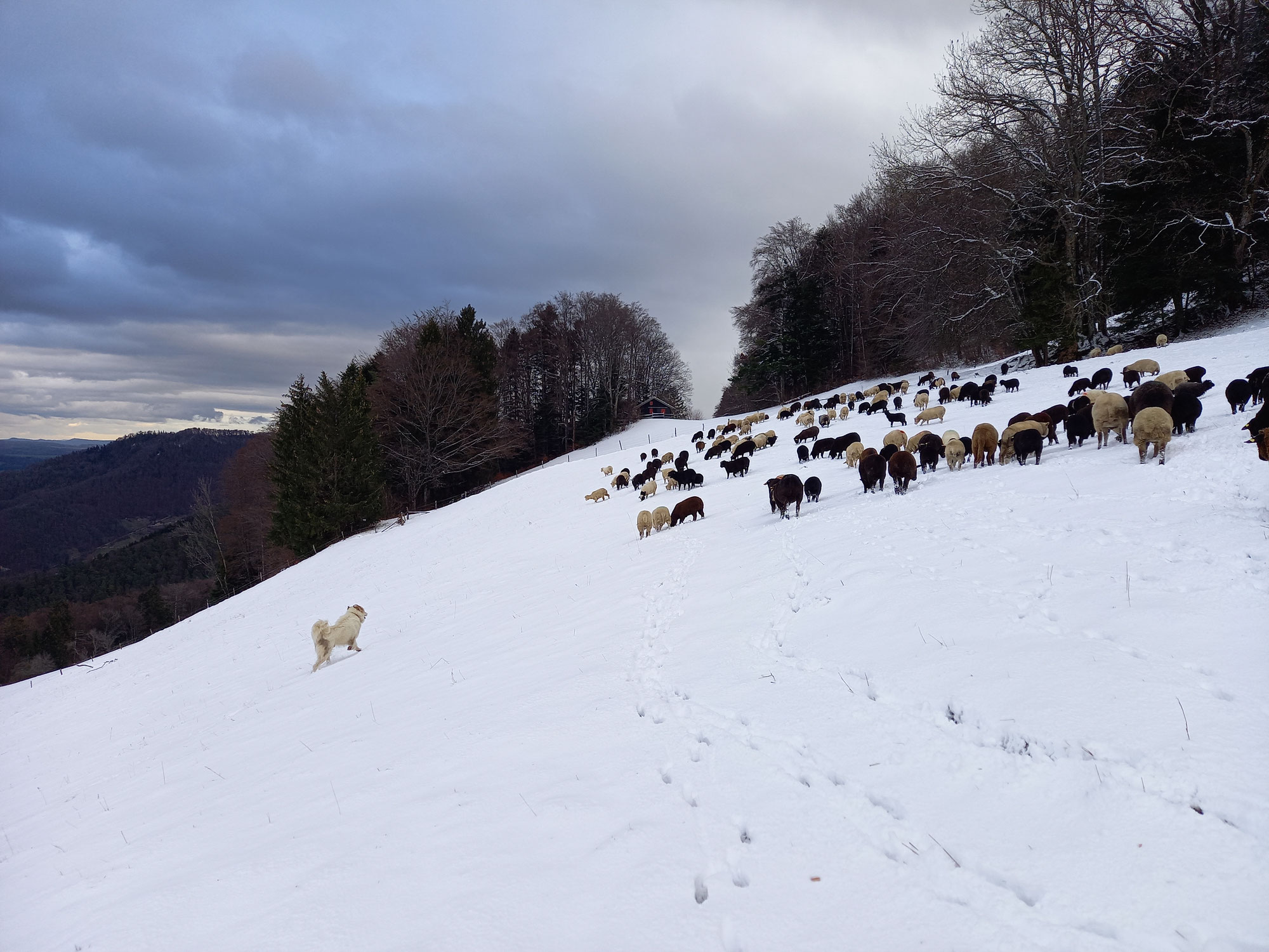 Winter - Sturm