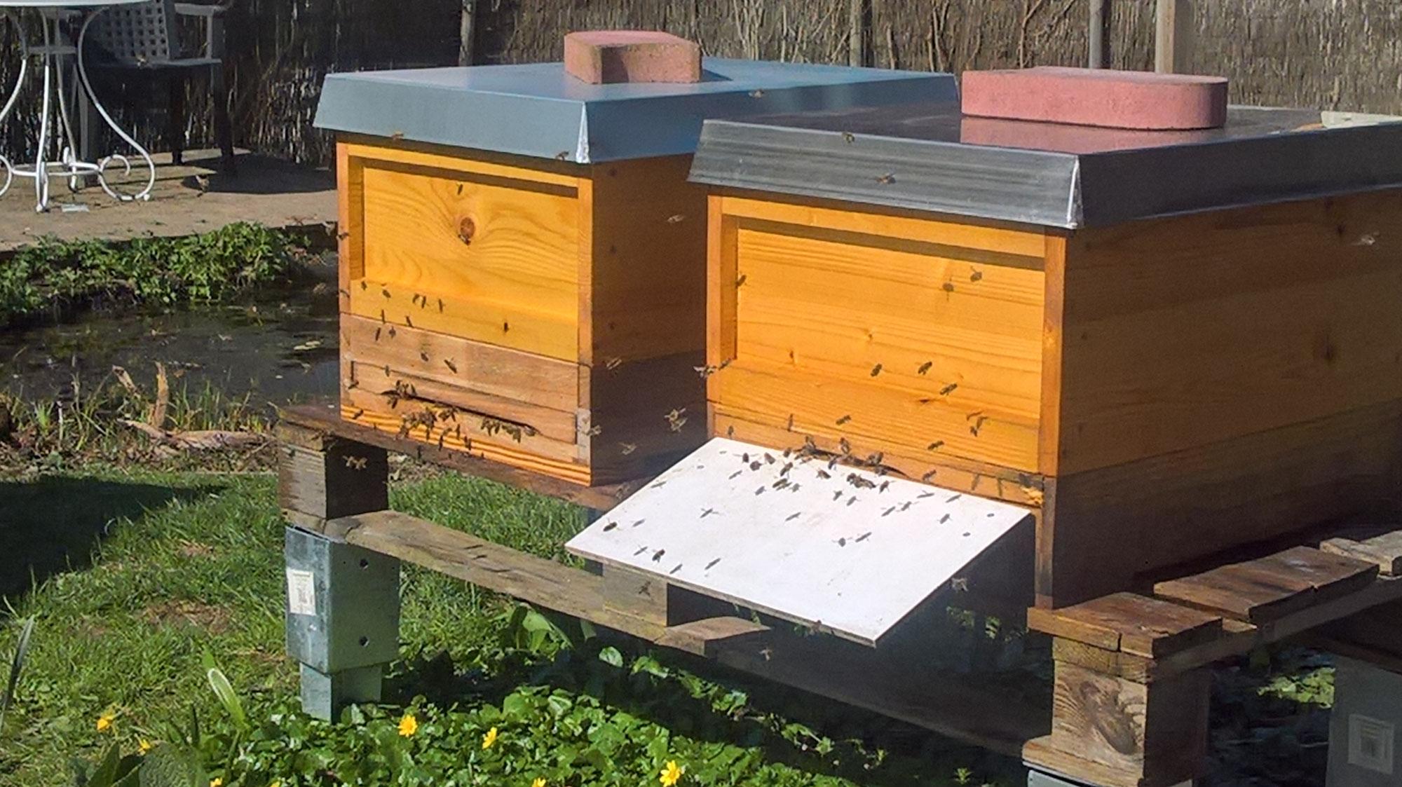 Patenschaften für Blühwiesen und Bienenvölker