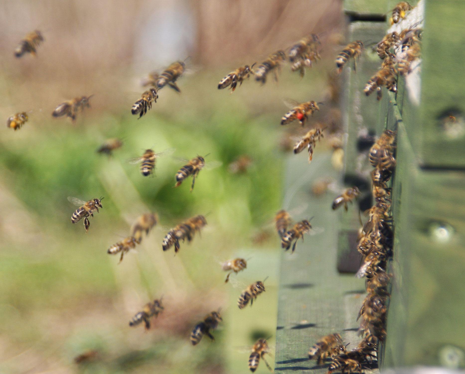 Bitte nicht: Insektenfütterung