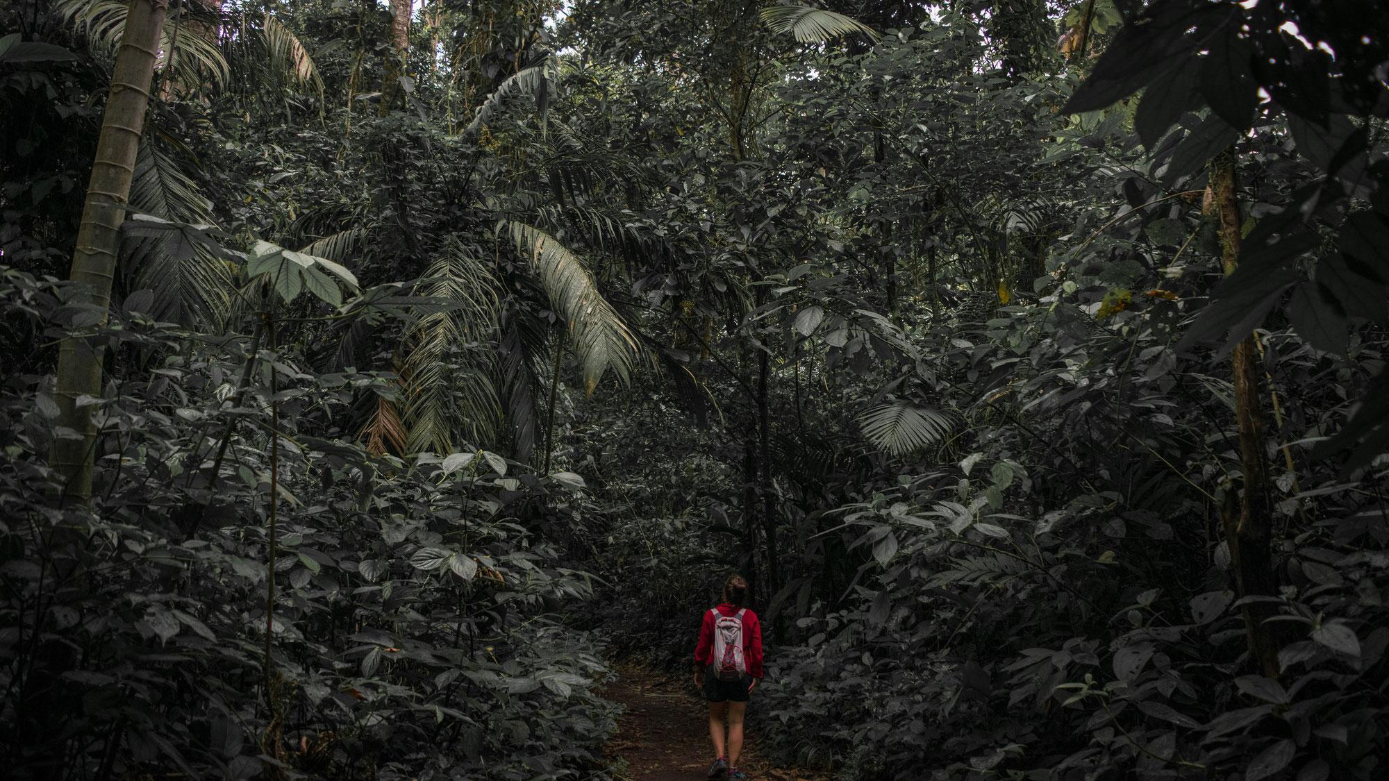 Mettersi in viaggio senza conoscere bene le regole  è  come entrare in una giungla senza la bussola.