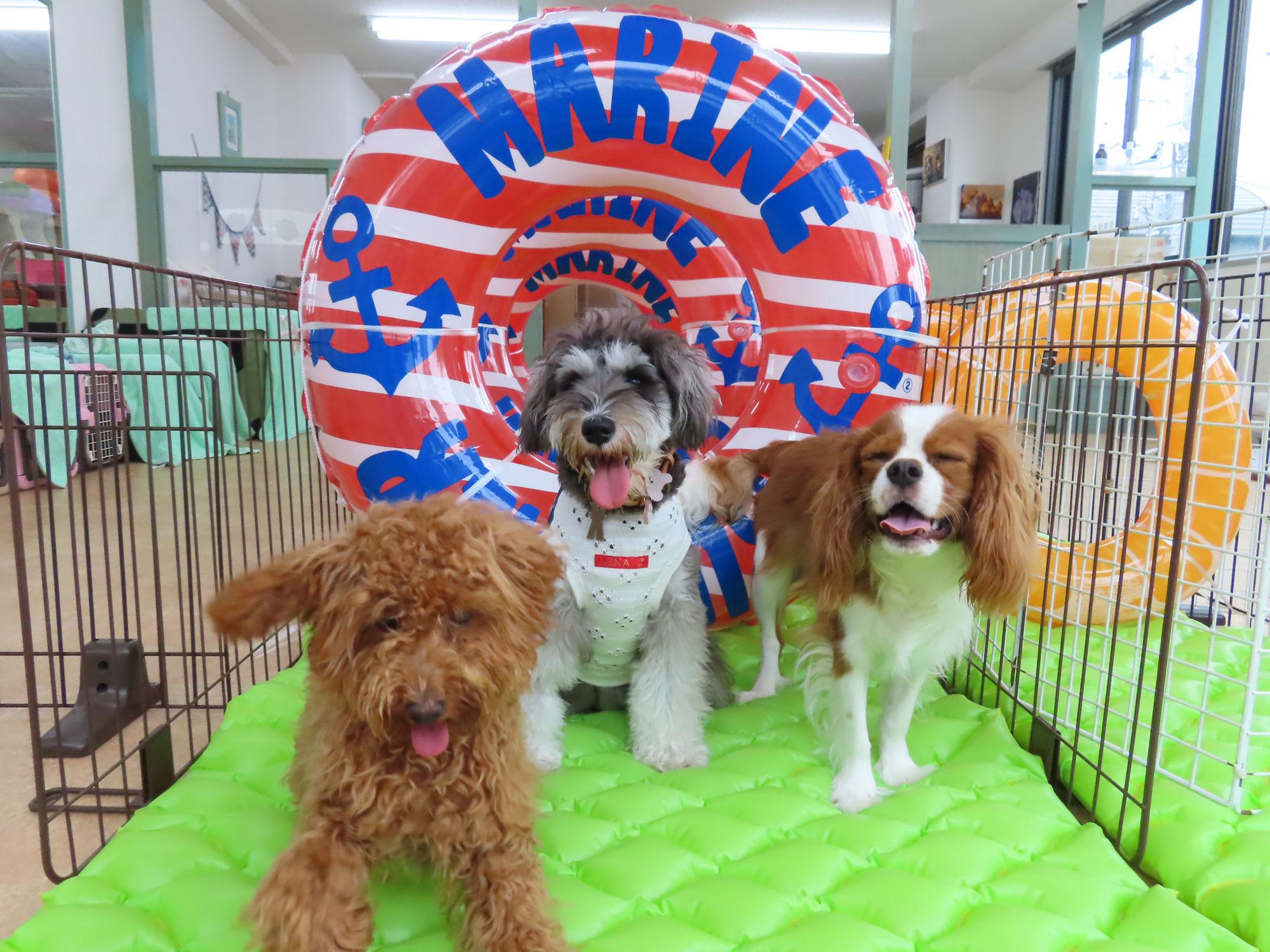 テリントンTタッチ講座 第2弾!!【犬に優しいリード&ハーネスの使い方】開催します(^^)/  犬のしつけ教室@アロハドギー