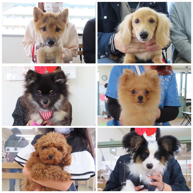 パピーパーティ-開催しました(4/4)【ALOHA塾】  犬のしつけ教室@アロハドギー