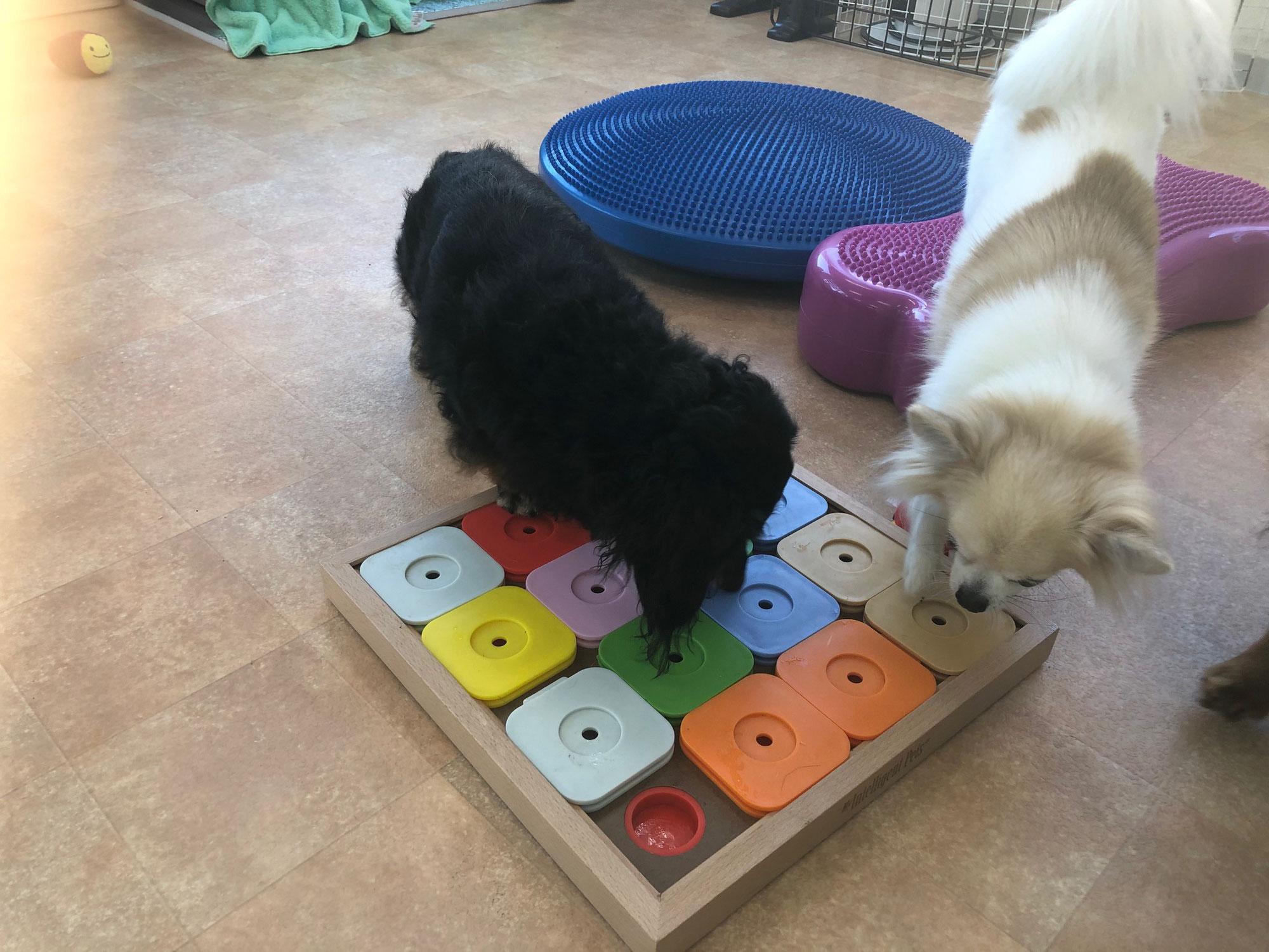 知育玩具で遊ぼう♪  犬のしつけ教室@アロハドギー