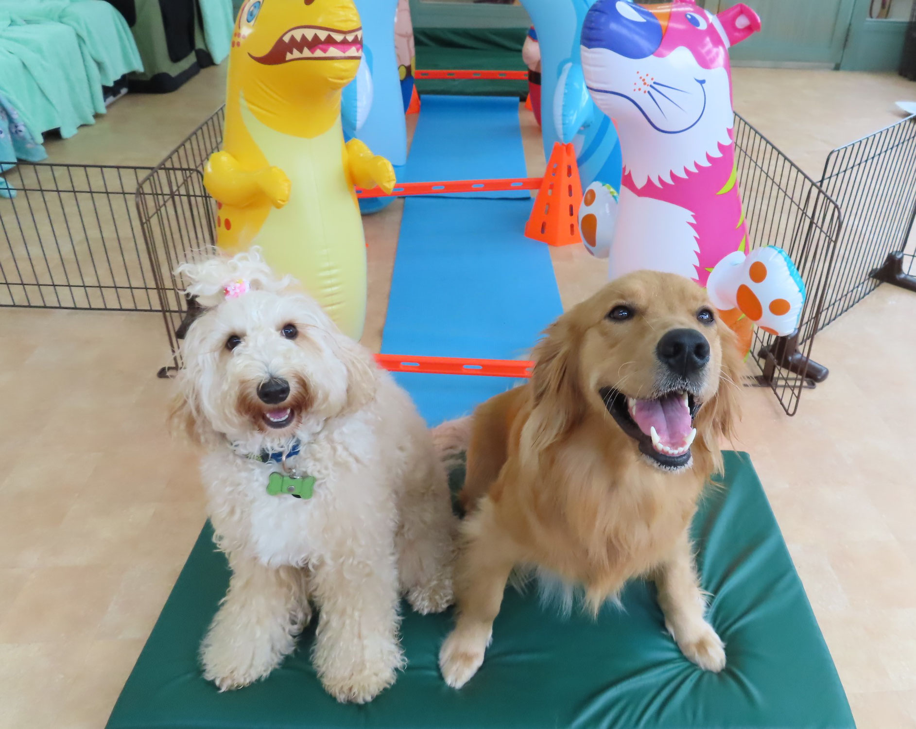 季節の変わり目は要注意!!  犬のしつけ教室@アロハドギー