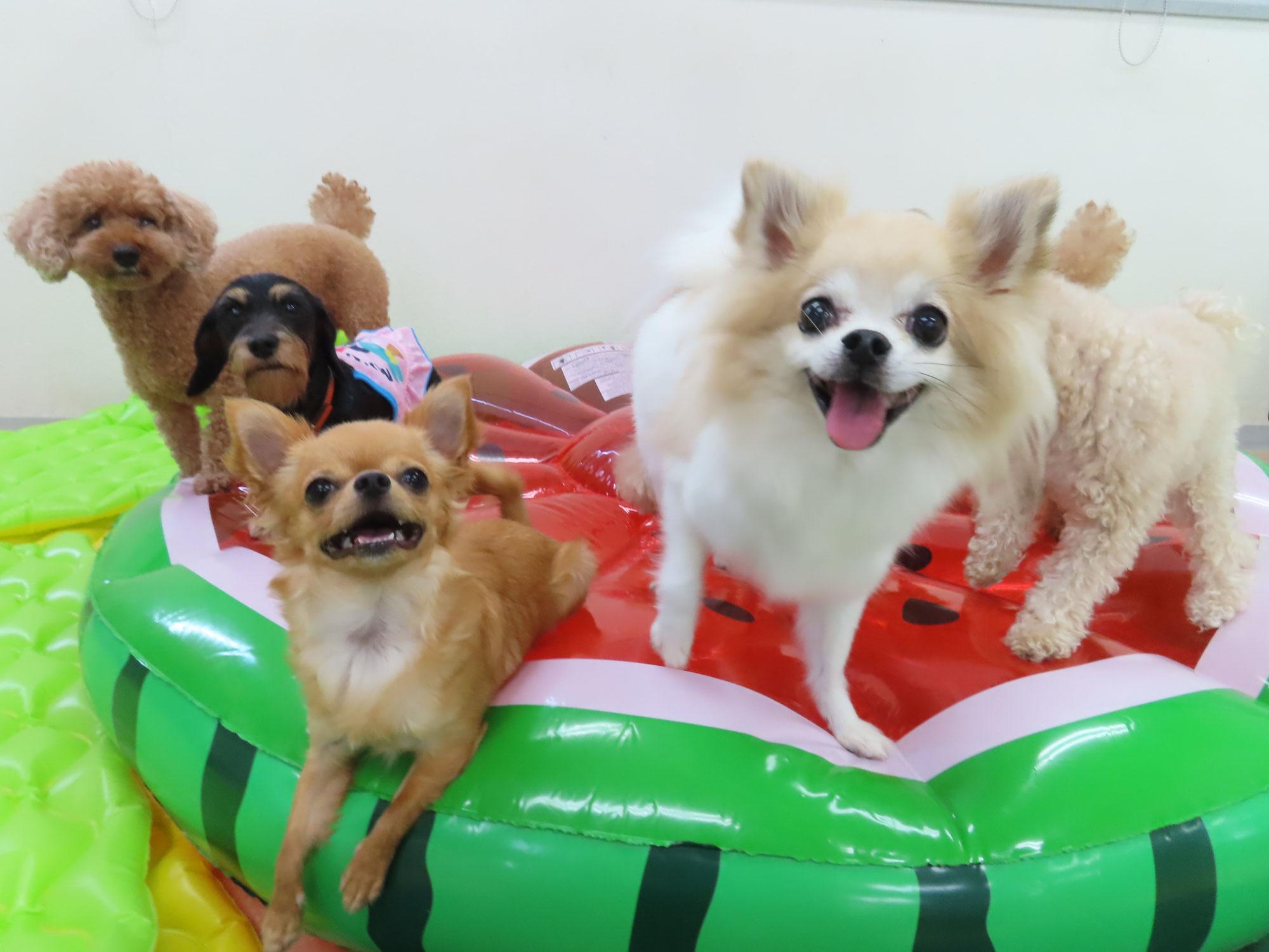 愛犬のウンチを観察しよう!  犬のしつけ教室@アロハドギー