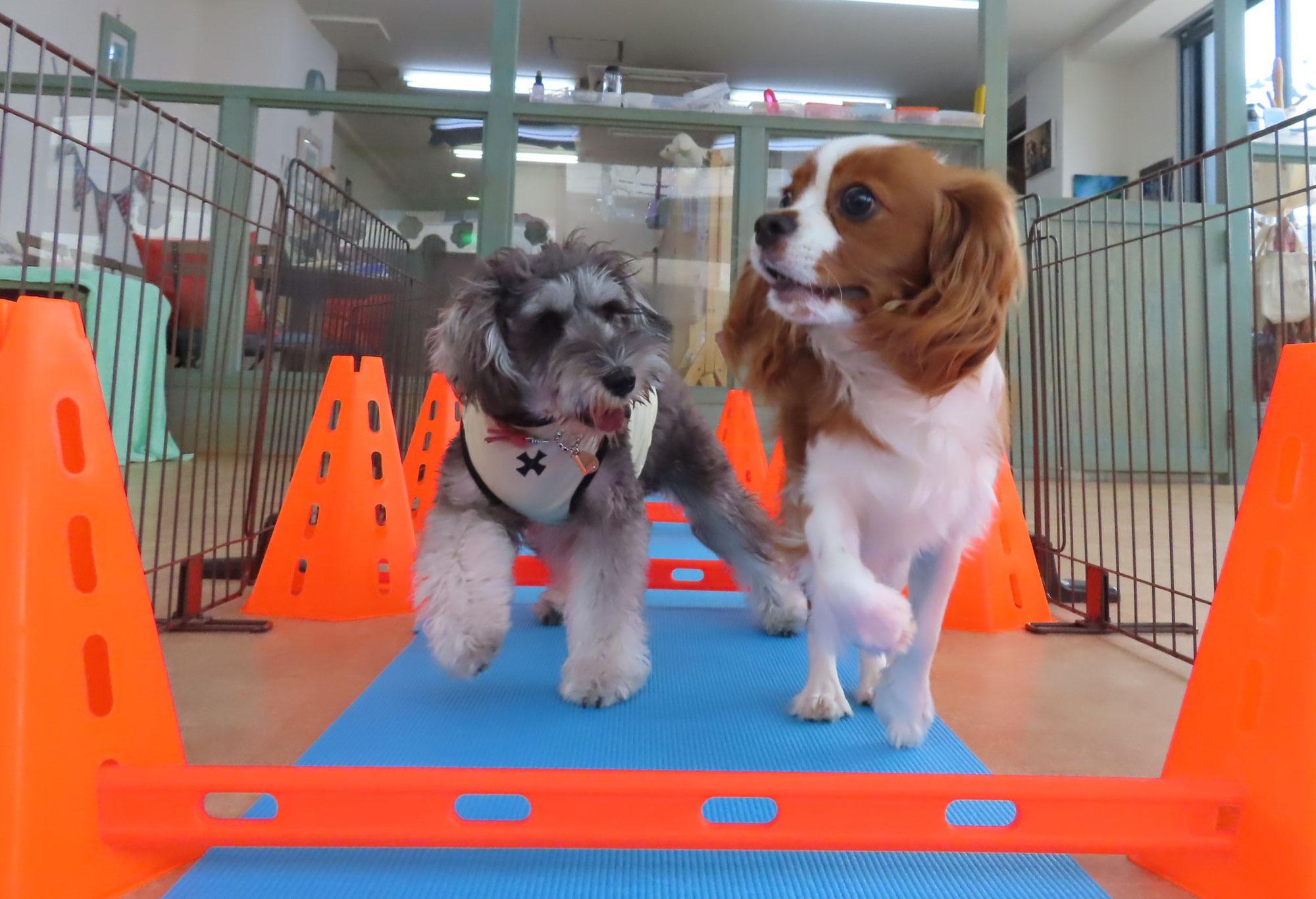 愛犬のお口のケアできていますか?  犬のしつけ教室@アロハドギー