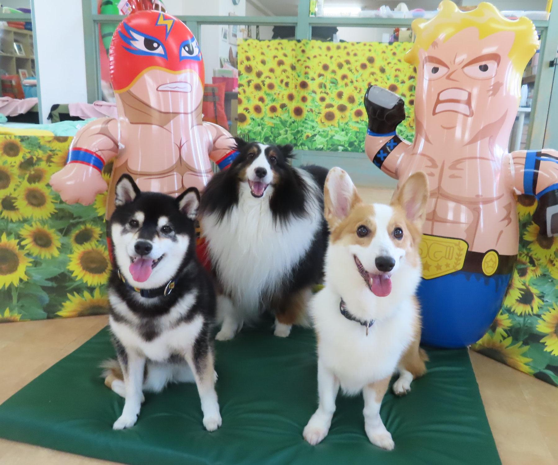 8/28(土)は【わんこ整体day】  犬のしつけ教室@アロハドギー