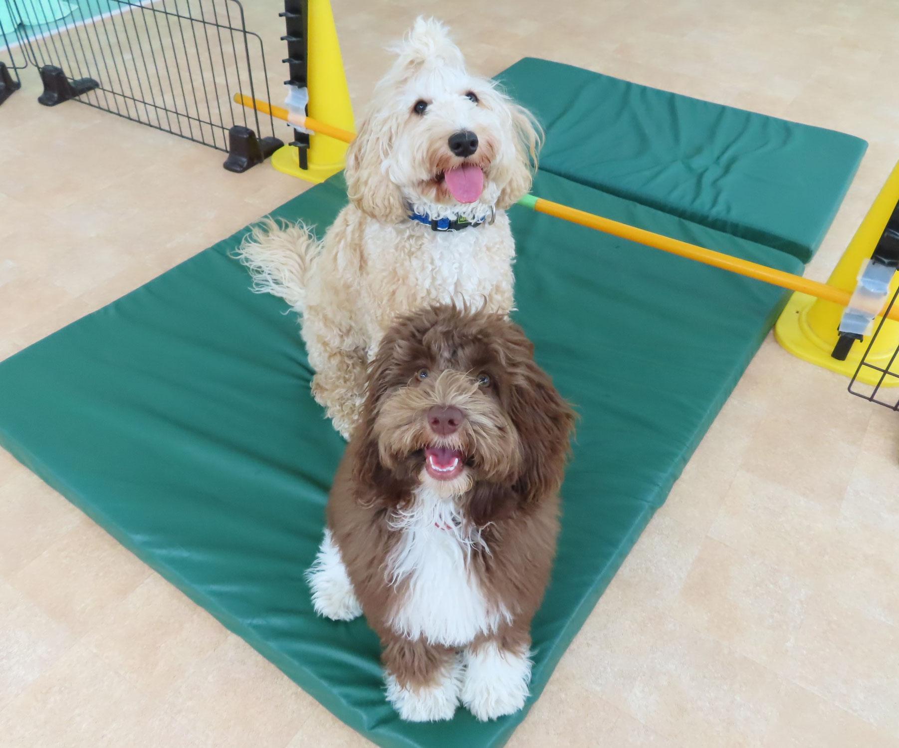 GWのお休みのお知らせ(*^-^*)  犬のしつけ教室@アロハドギー