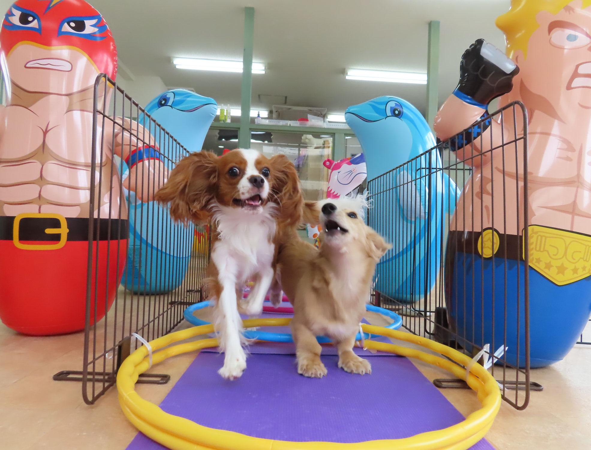 まだまだ先(来年)の話ですが。。。♪【ALOHA塾】  犬のしつけ教室@アロハドギー