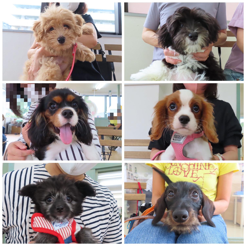パピーパーティ-開催しました(6/6)【ALOHA塾】  犬のしつけ教室@アロハドギー