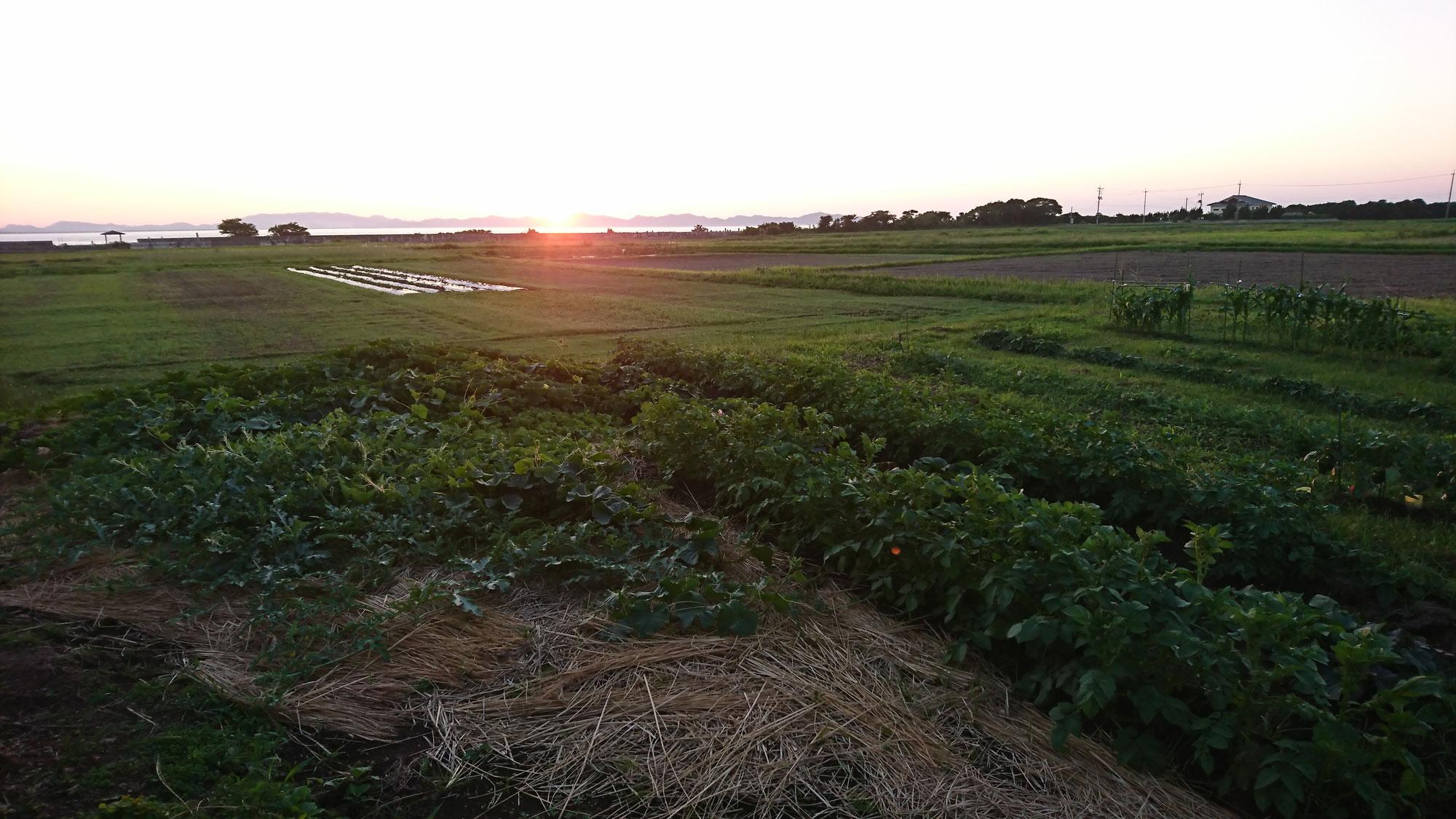 第3話 相続手続き完了!日本の農業は大丈夫か?
