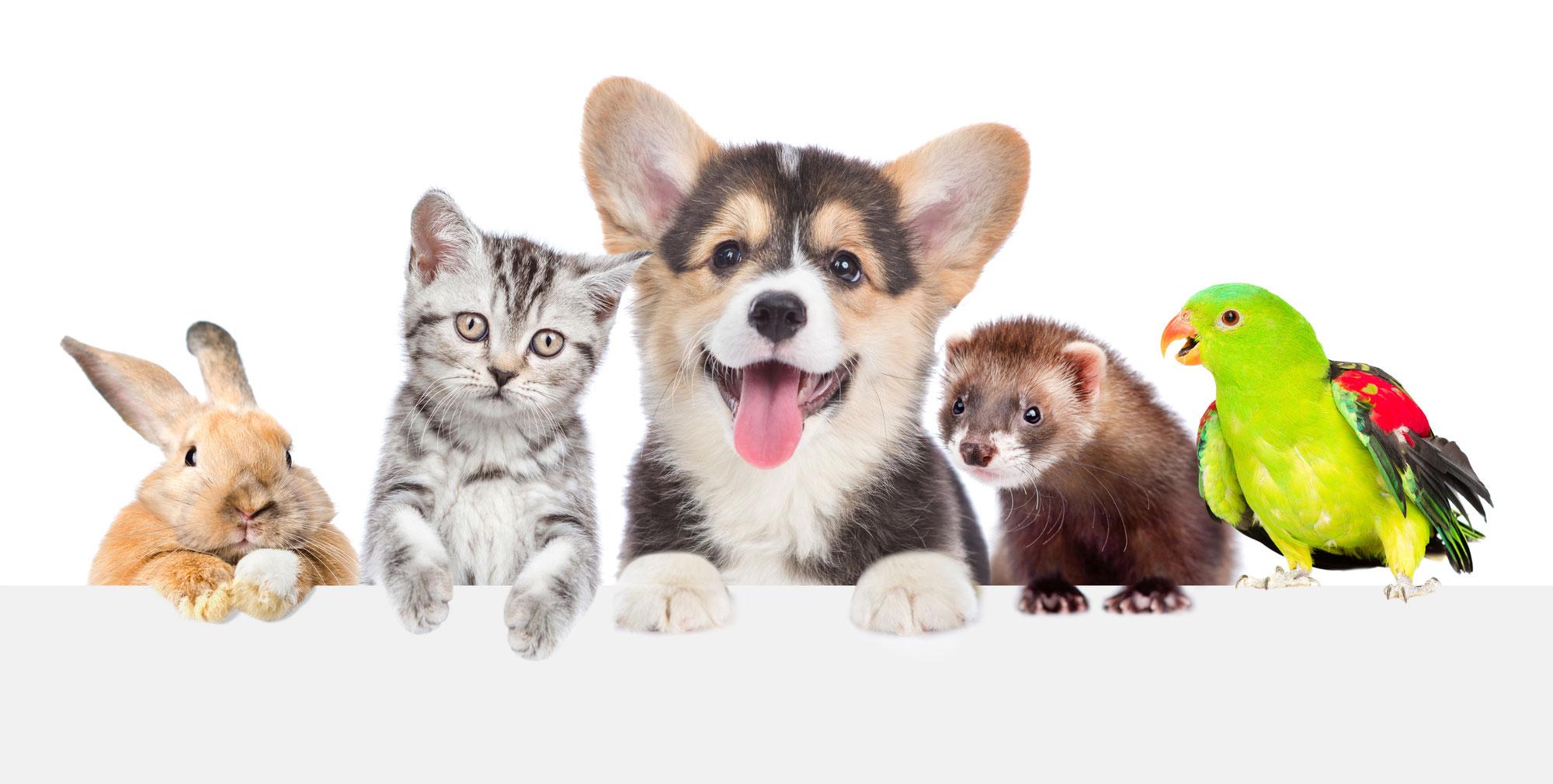 Alle Jahre wieder - der deutsche Heimtiermarkt