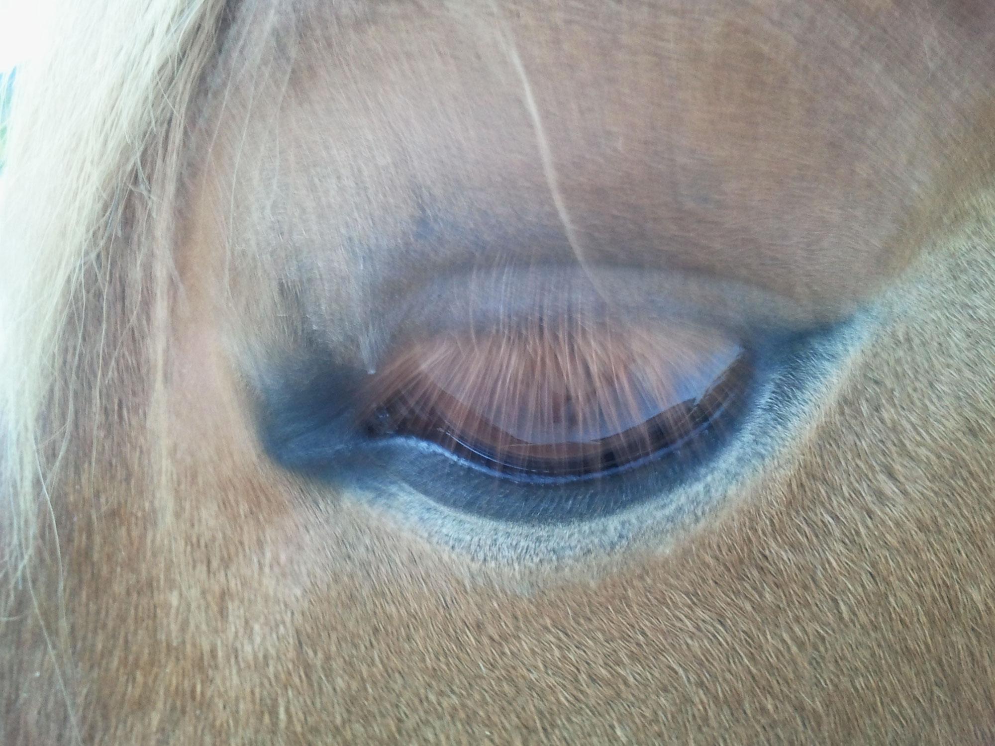 Wahrnehmungskanäle in der Tierkommunikation