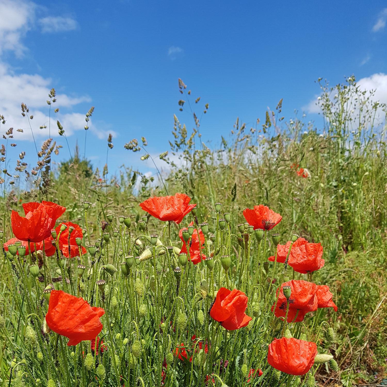 Pourquoi et comment faire une détox de printemps