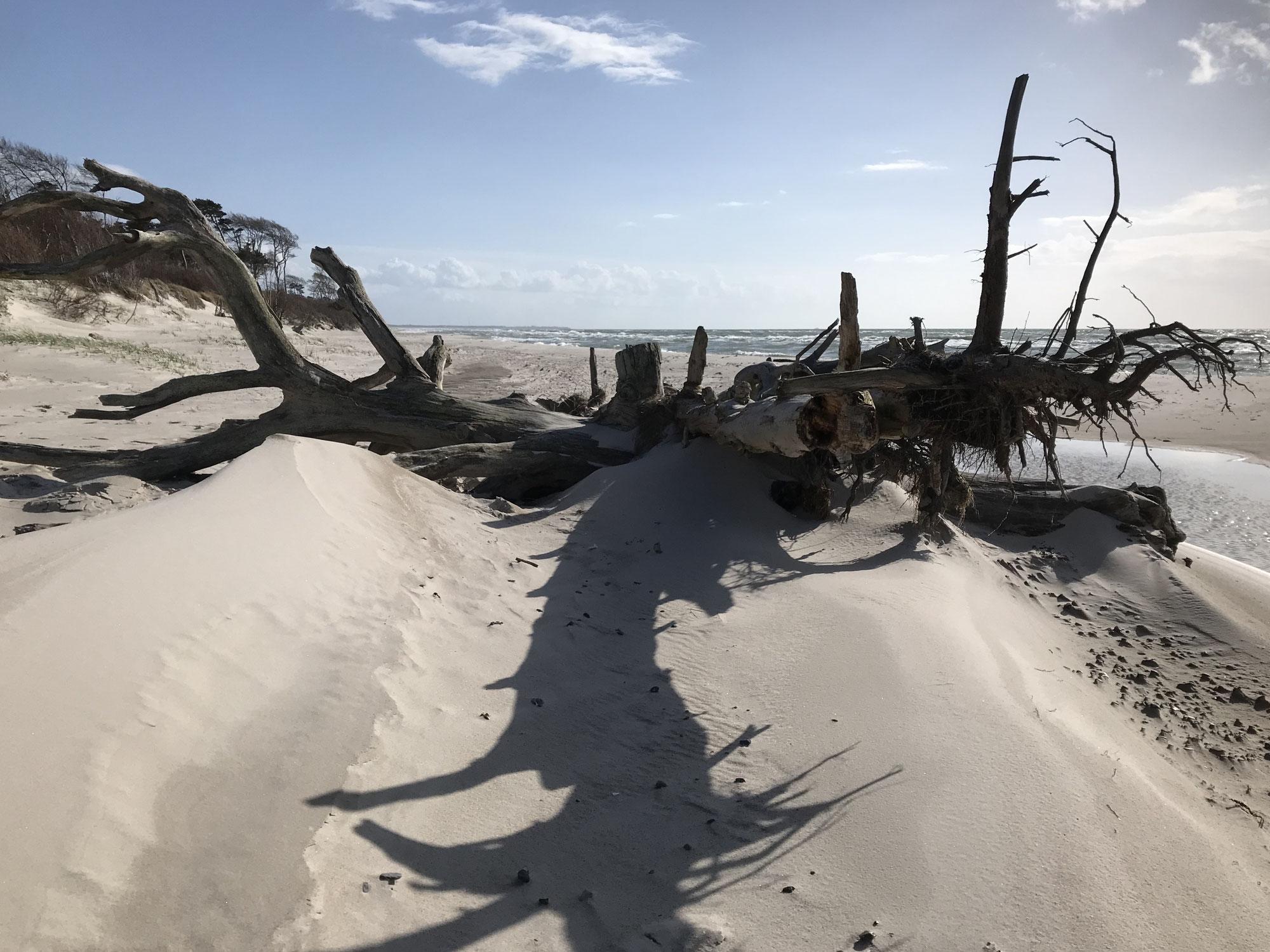Nach dem Sturm mit Orkanböen - was gibt's Neues am Weststrand?