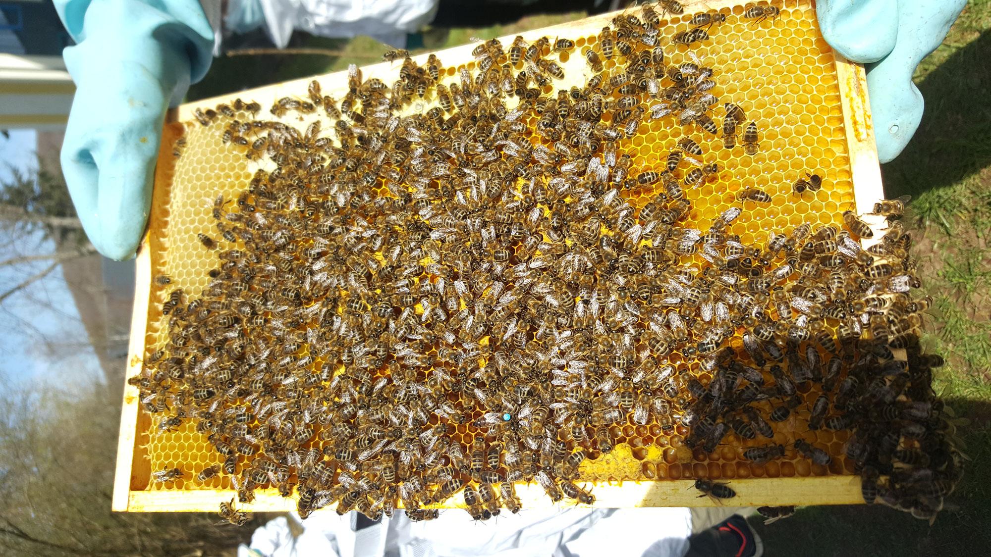 World Bee Day an der GS Namborn
