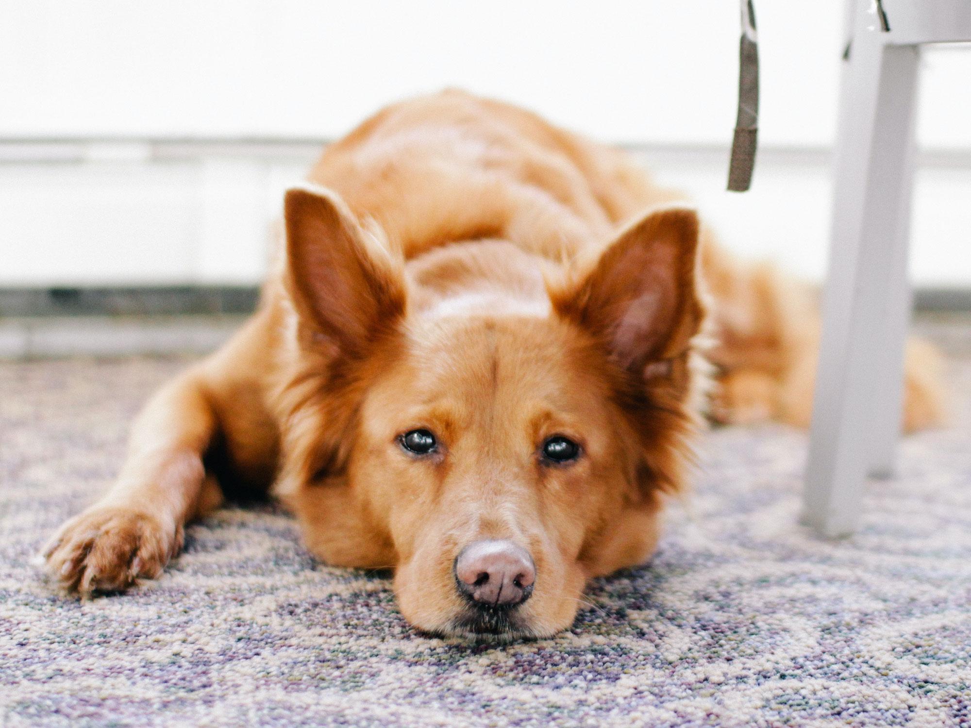 Hundekot - sauber ist schöner