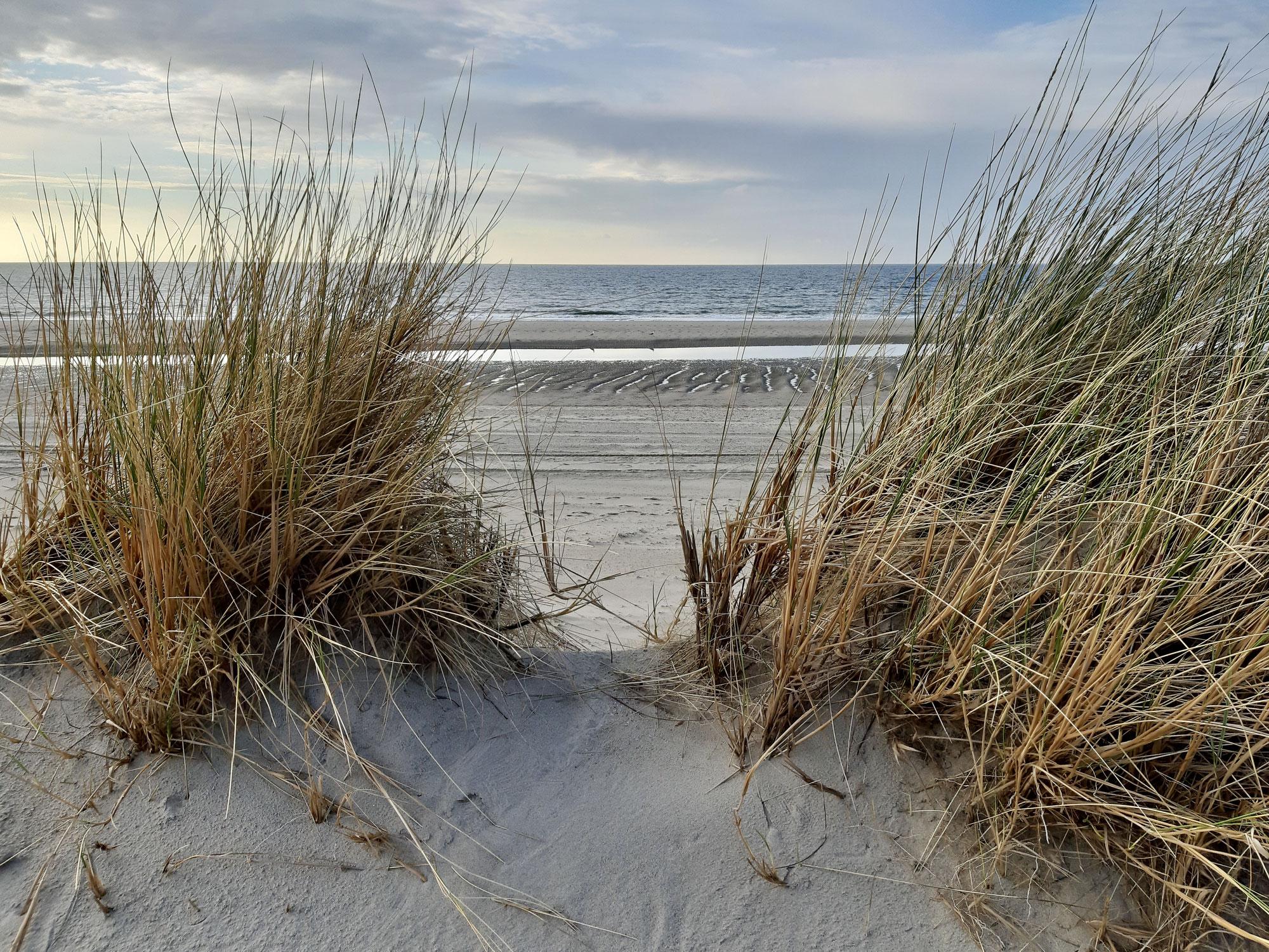 Sandkörner