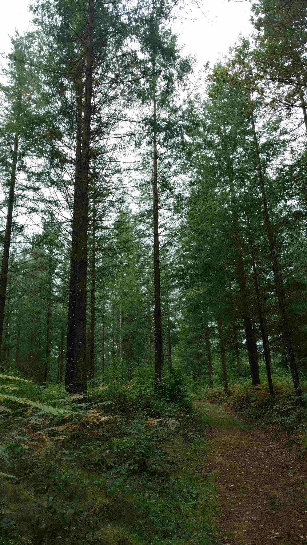 Avenir Forêt acquiert son 22ème massif forestier avec 30 ha à Glénat dans le Cantal