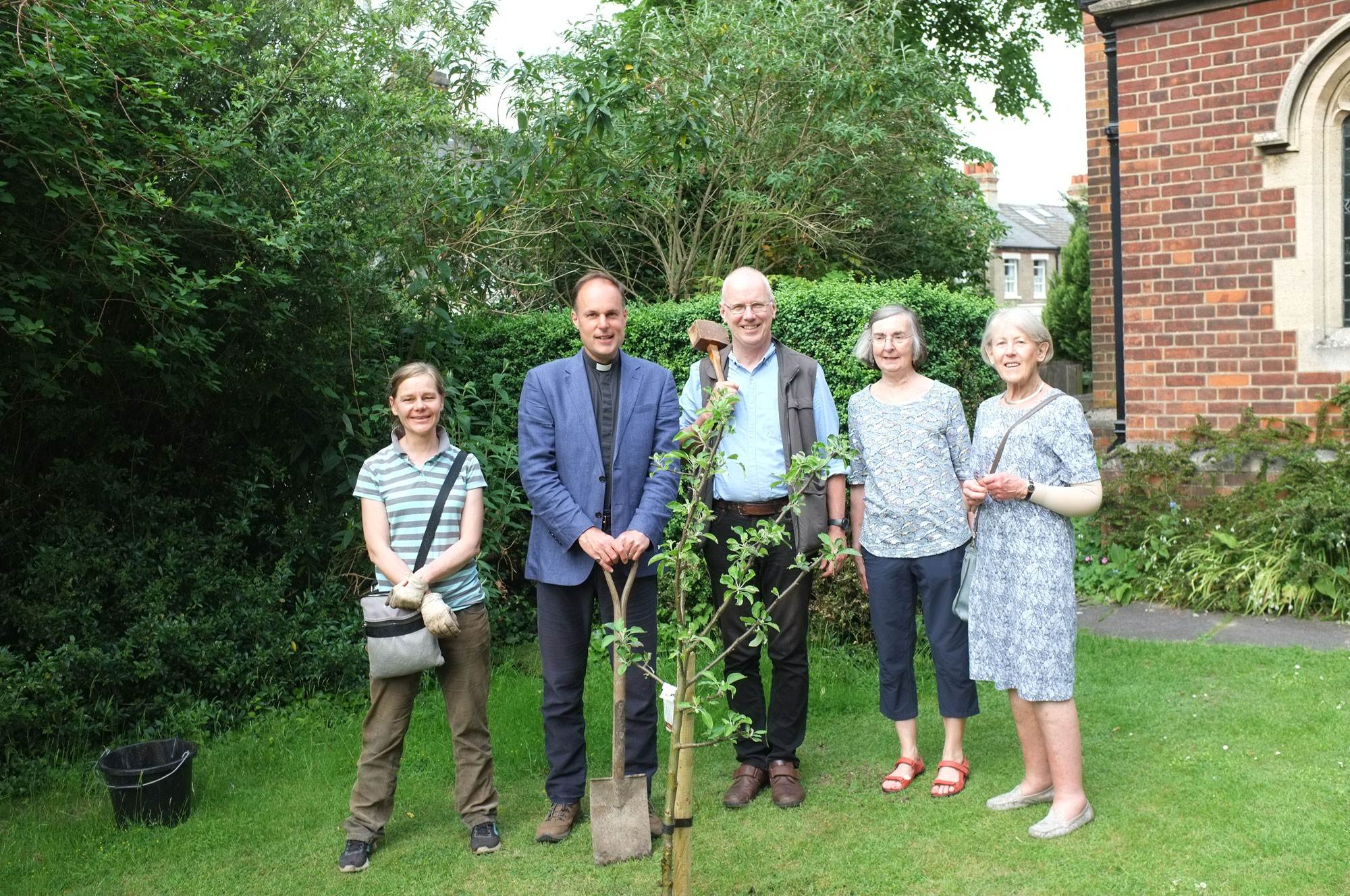 Planting of an apple tree