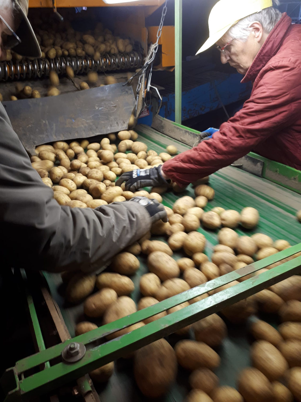 Kartoffeln, Kartoffeln, Kartoffeln...