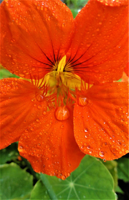 .....Regen....Druppels.....Parels.....