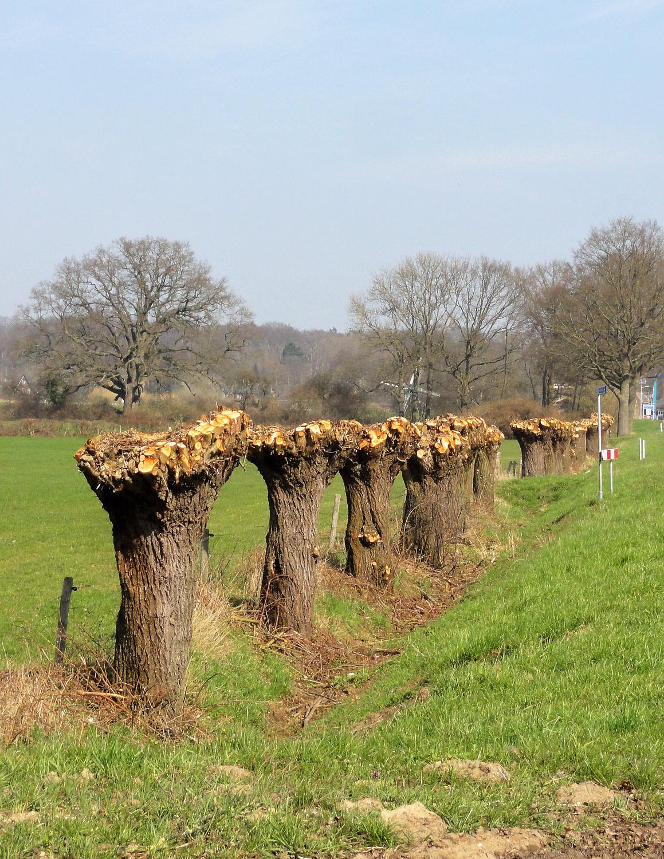 .....in Stilte.....een grote boom is gevallen....