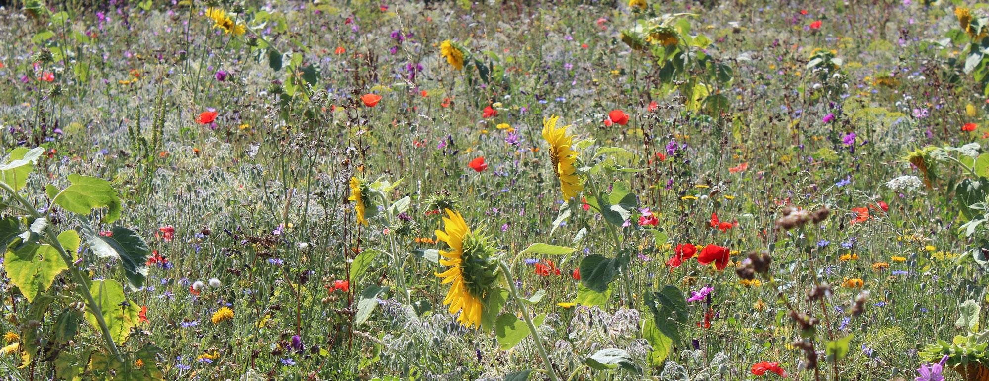 Gartentipps kreisverband f r gartenbau und landespflege for Garten tipps