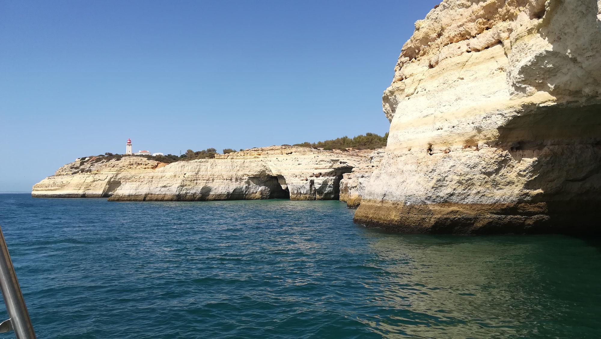 Delfine -  Das Wunder an Portugals Traumküste