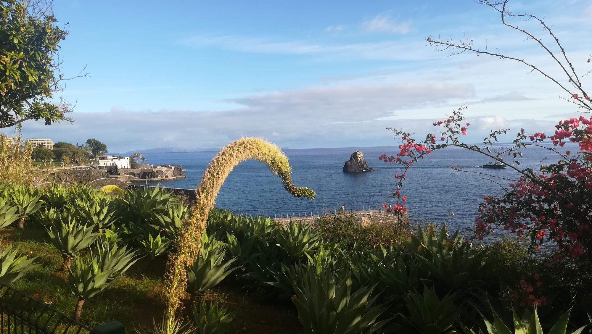 Malerisches Madeira: Roadtrip oder Standortrundreise?