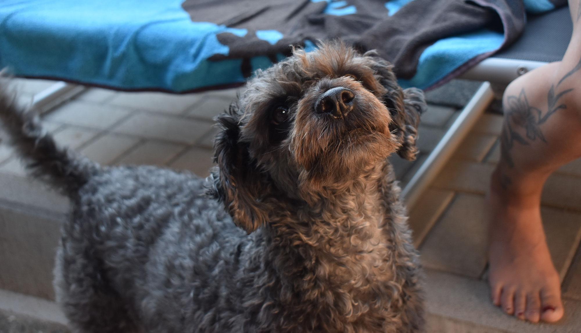 Hundesteuererhöhung durchgewunken, Bedenken im Rat
