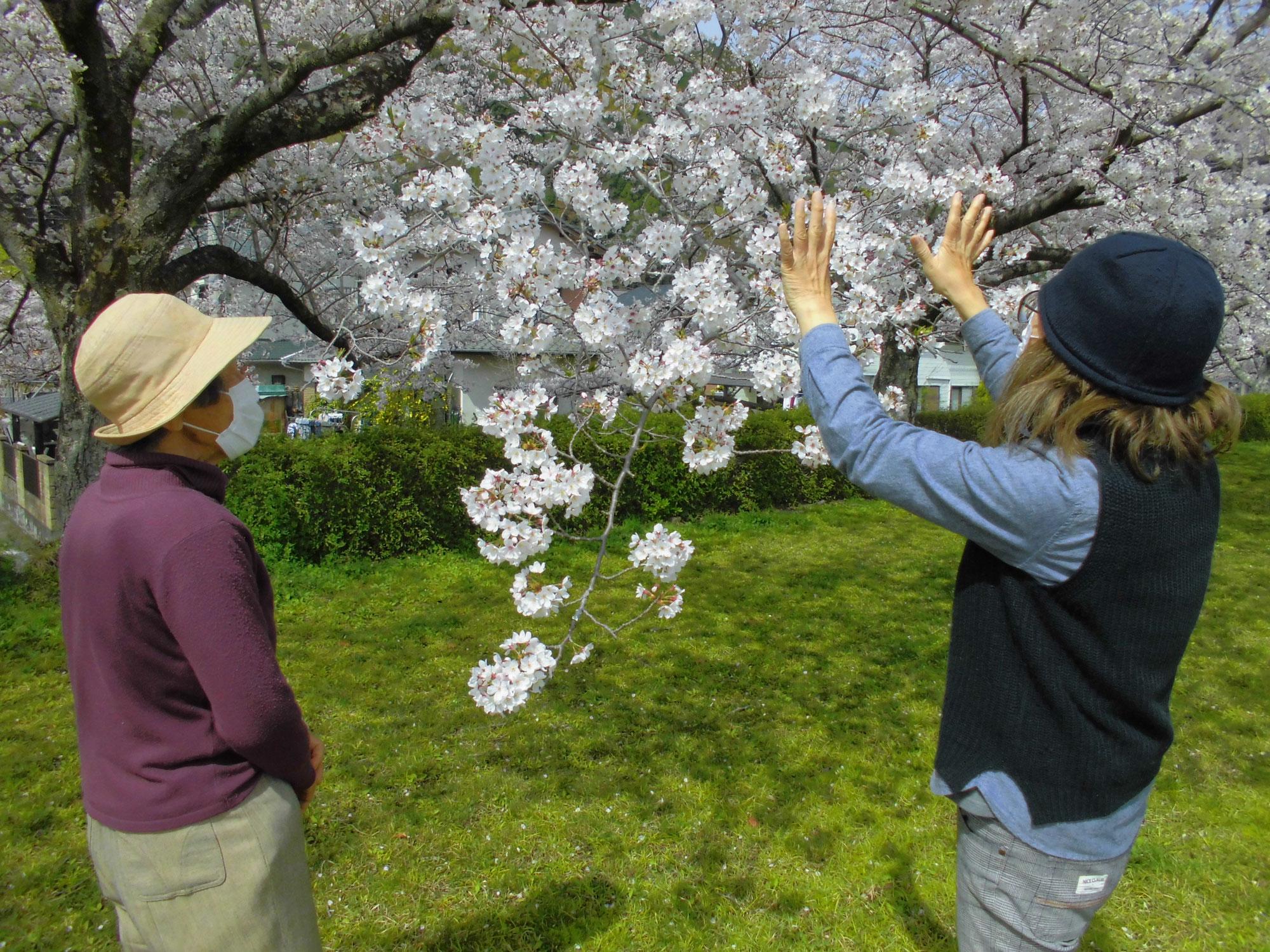 桜を見に行ってきました!