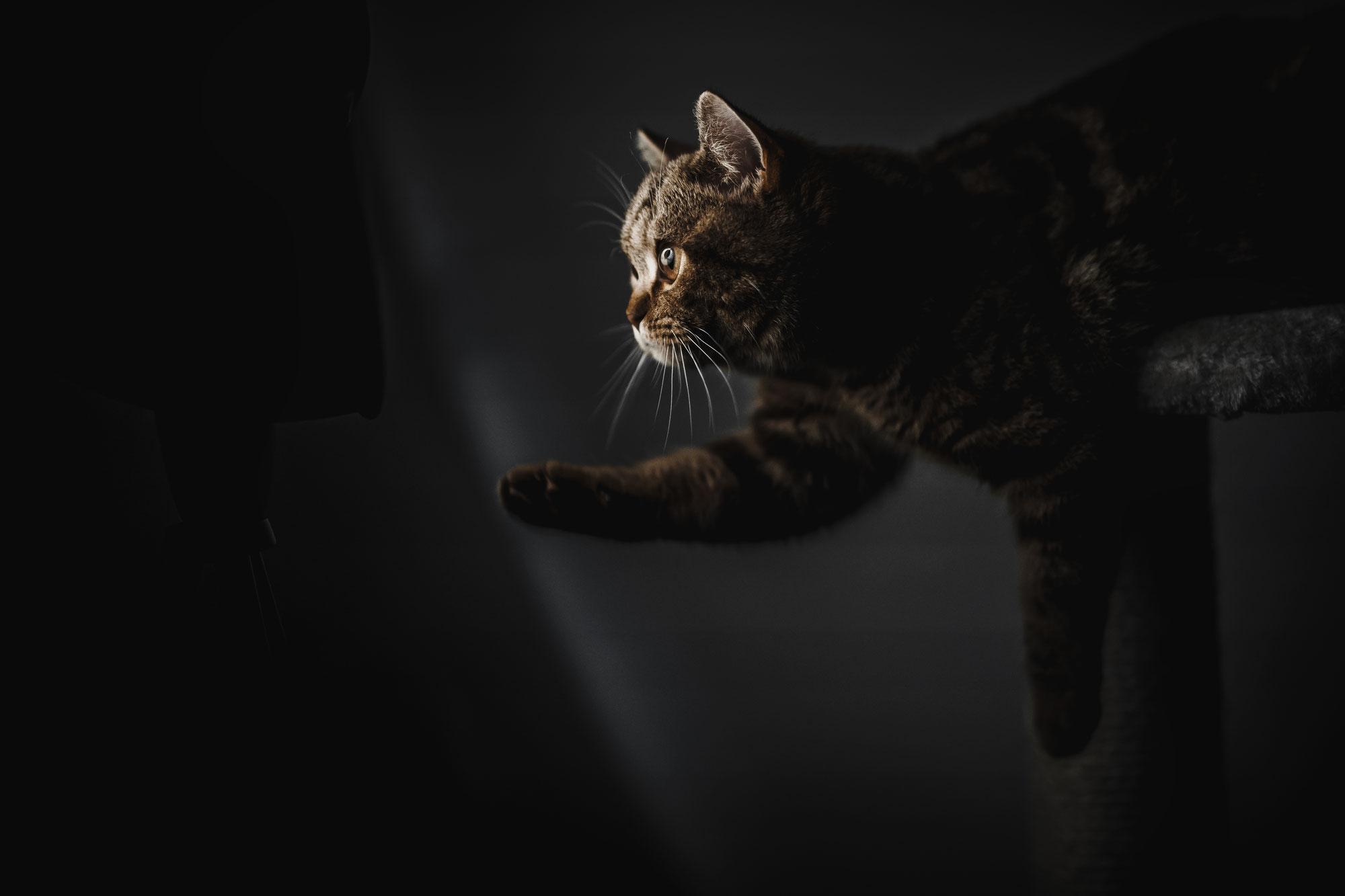 Auf die Katz gekommen
