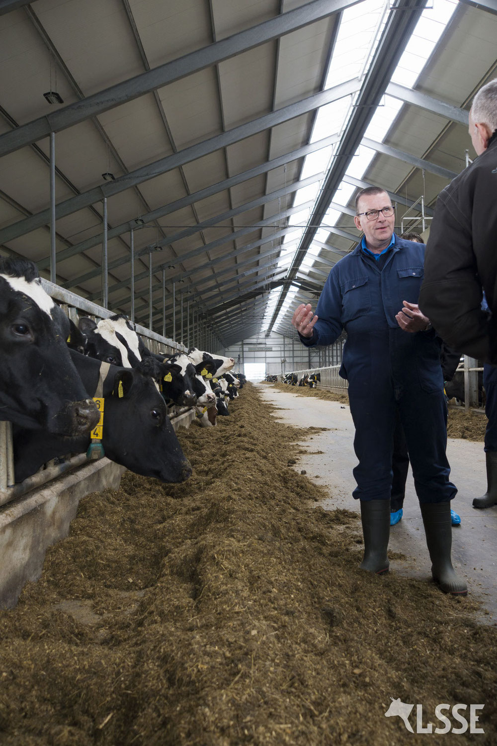 THE INFLUENCE OF LIGHT ON MILK PRODUCTION IN YOUR COWS