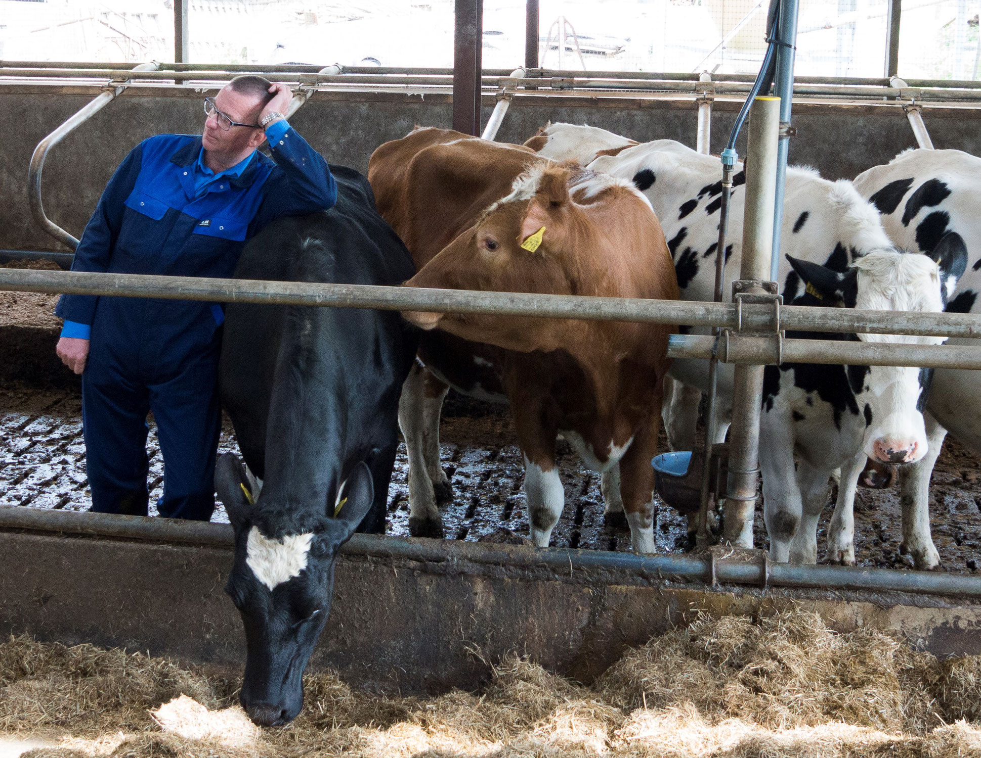 IT STARTS WITH A CORRECT RAISING OF THE CALF
