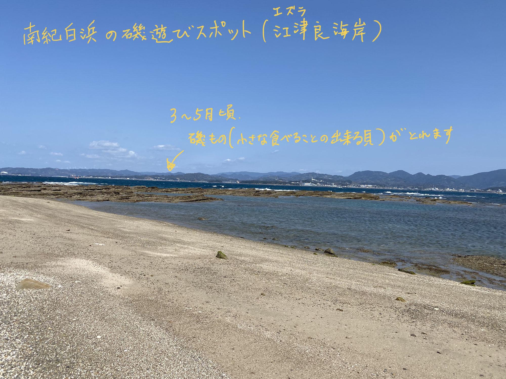 (地域情報)紀南春の磯遊びスポット(江津良海岸)