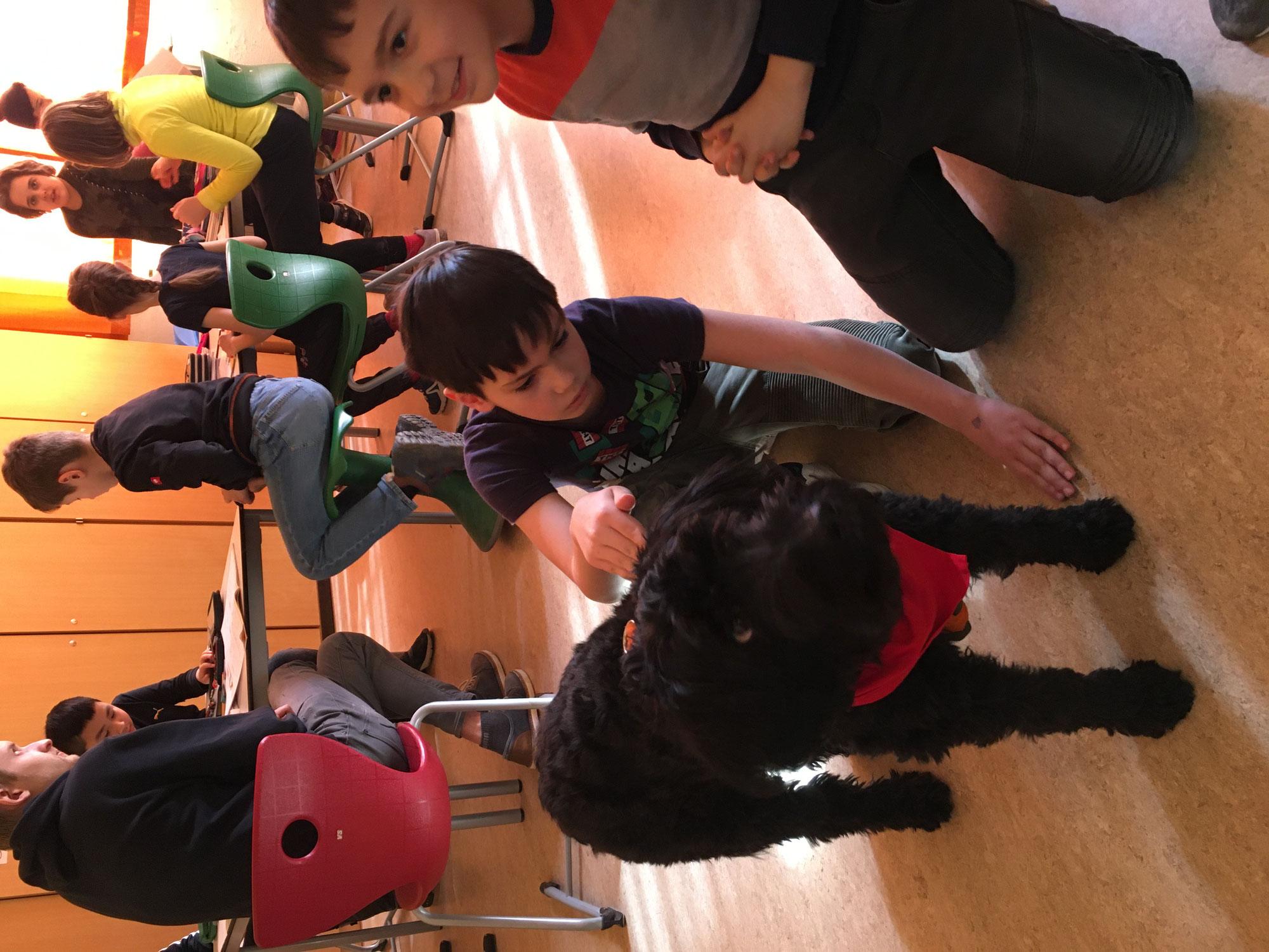 Mathematik mit Schulhündin Lotte