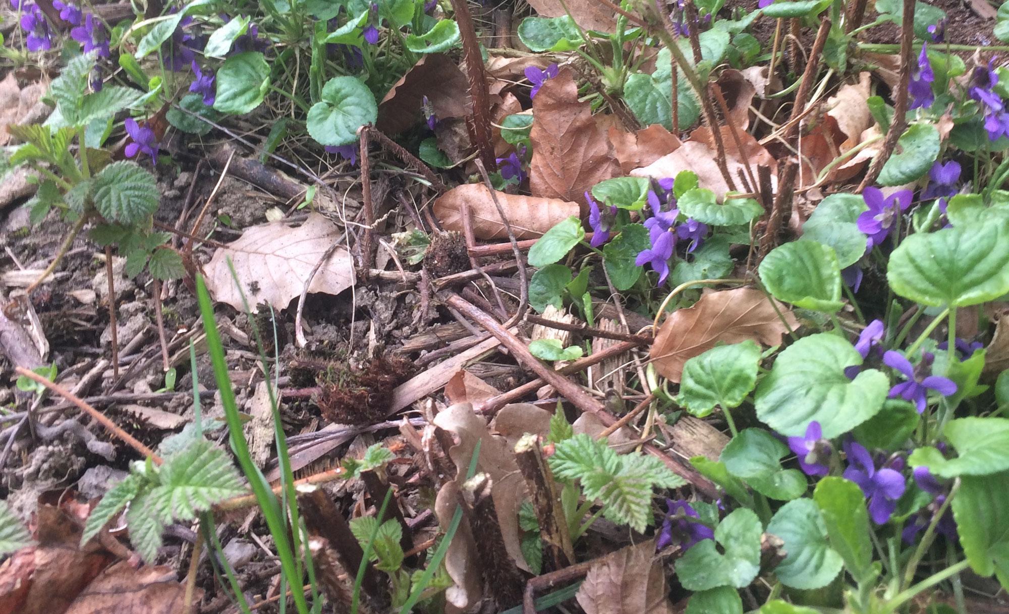 Erste Frühlings(un)kräuter