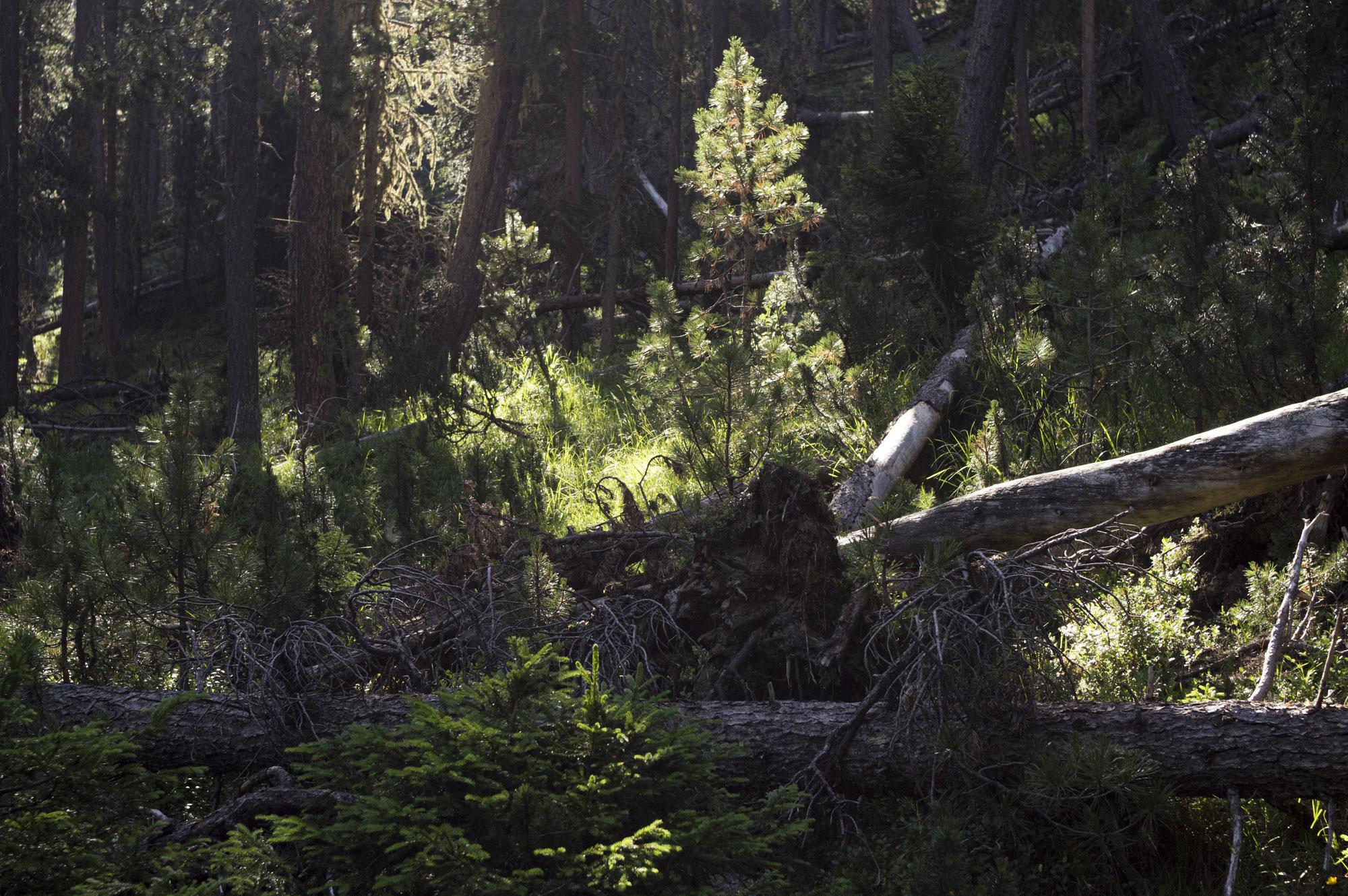 Im Wald der toten Bäume