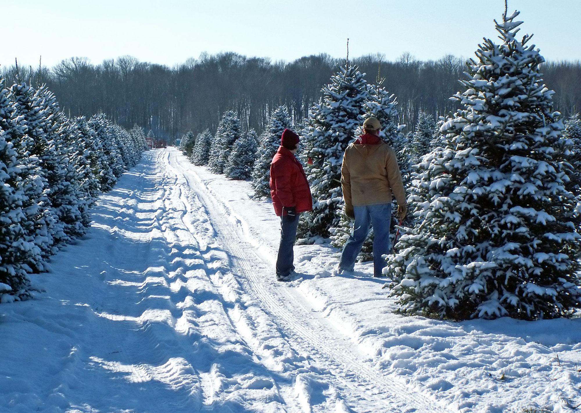 Weihnachtsbaum online bestellen tannenbaum kaufen mit lieferservice weihnachtsbaum kaufen - Weihnachtsbaum kaufen hamburg ...