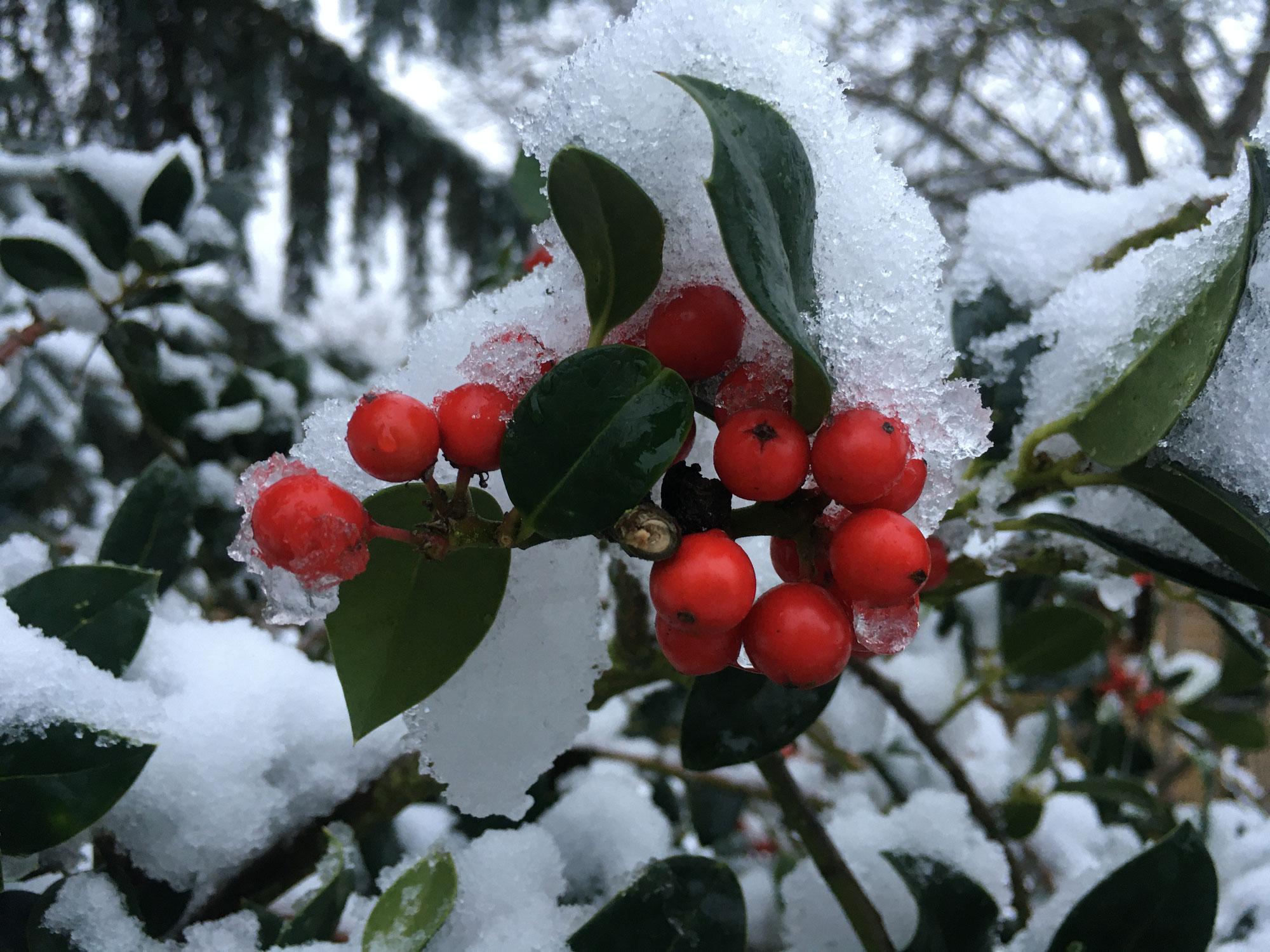 Gefährdete Schönheiten im winterlichen Augustenbühl